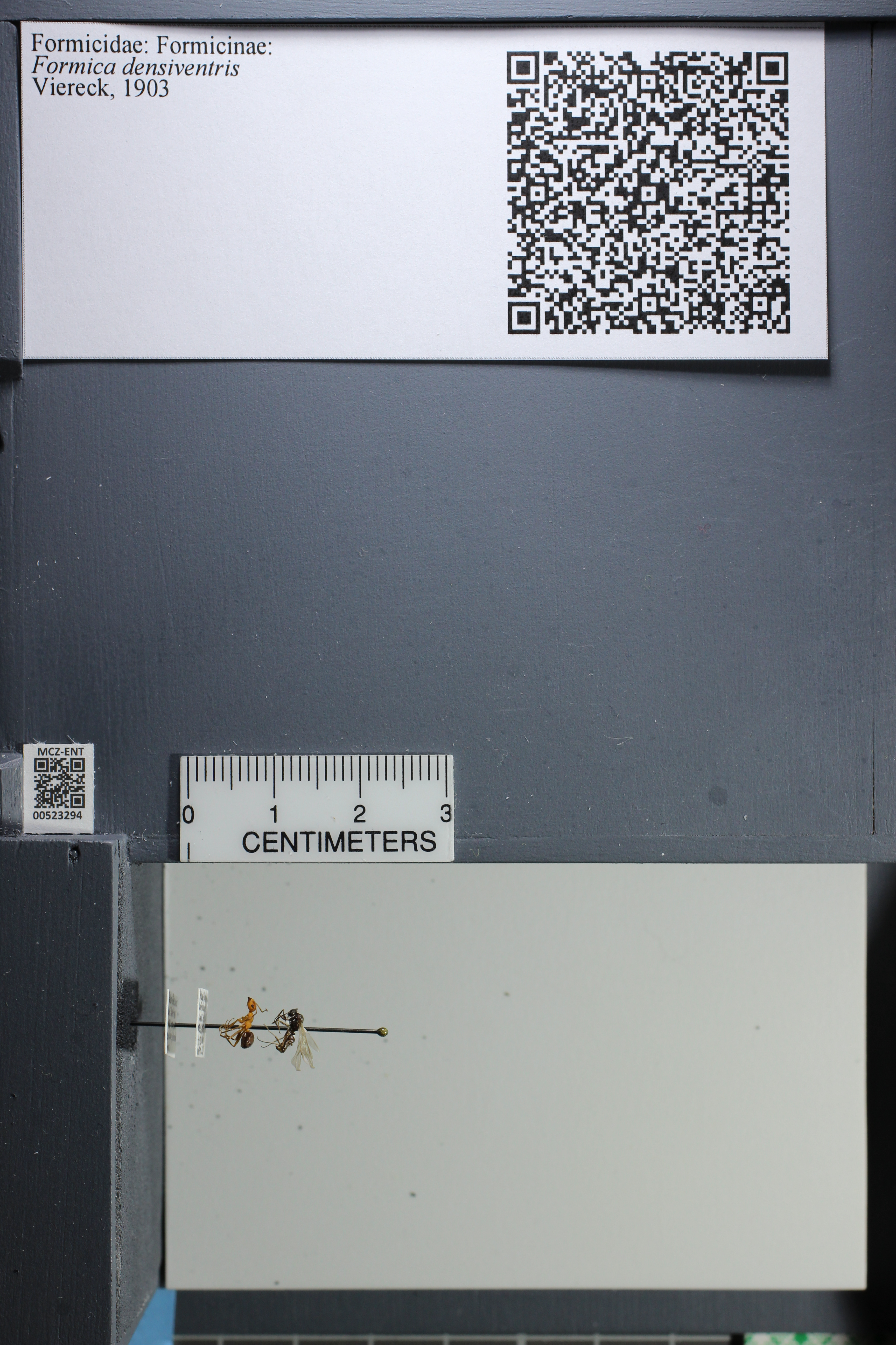 http://mczbase.mcz.harvard.edu/specimen_images/ent-formicidae/datashot/2014_02_26/IMG_300885.JPG