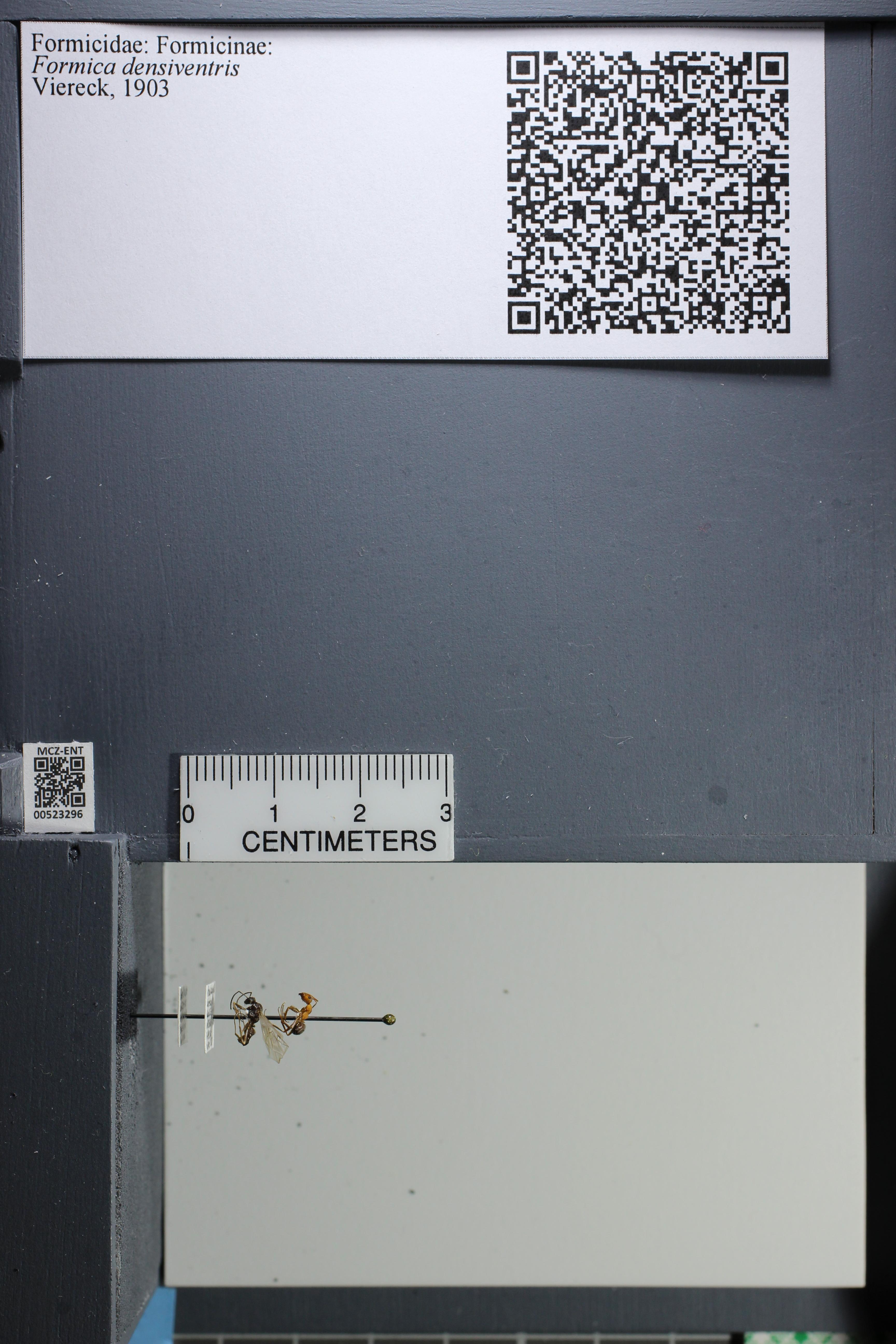 http://mczbase.mcz.harvard.edu/specimen_images/ent-formicidae/datashot/2014_02_26/IMG_300887.JPG