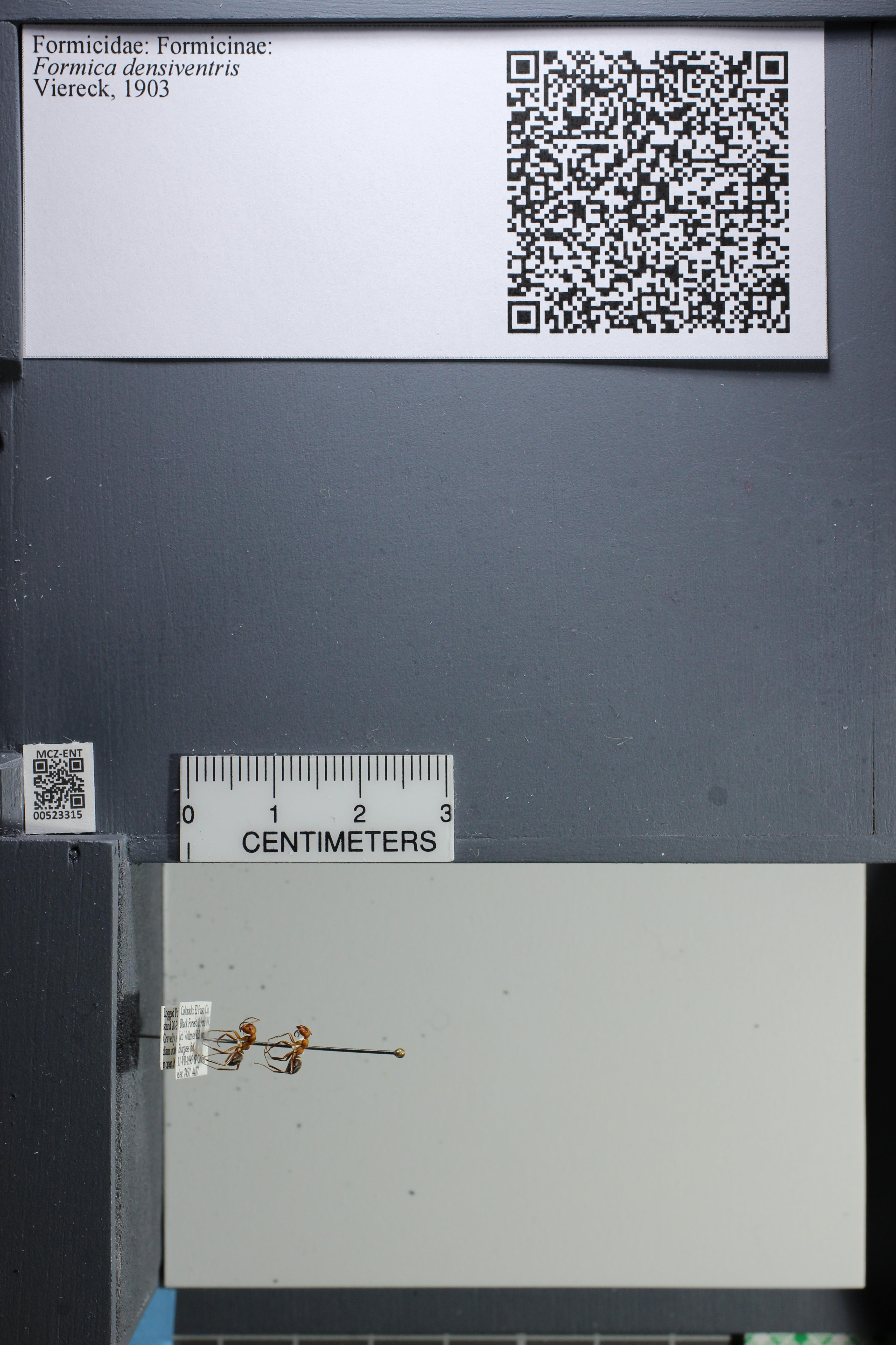 http://mczbase.mcz.harvard.edu/specimen_images/ent-formicidae/datashot/2014_02_26/IMG_300906.JPG