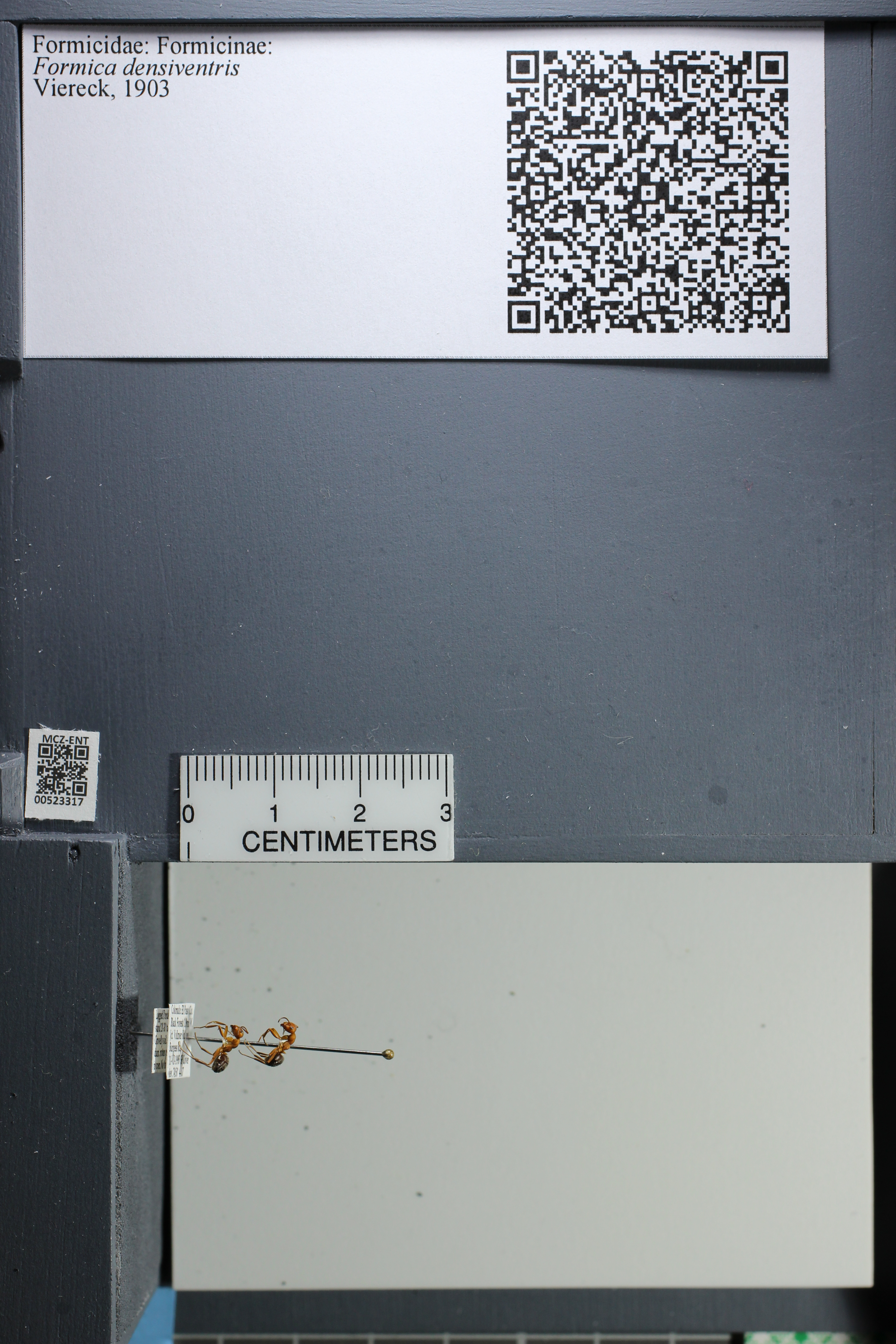 http://mczbase.mcz.harvard.edu/specimen_images/ent-formicidae/datashot/2014_02_26/IMG_300908.JPG