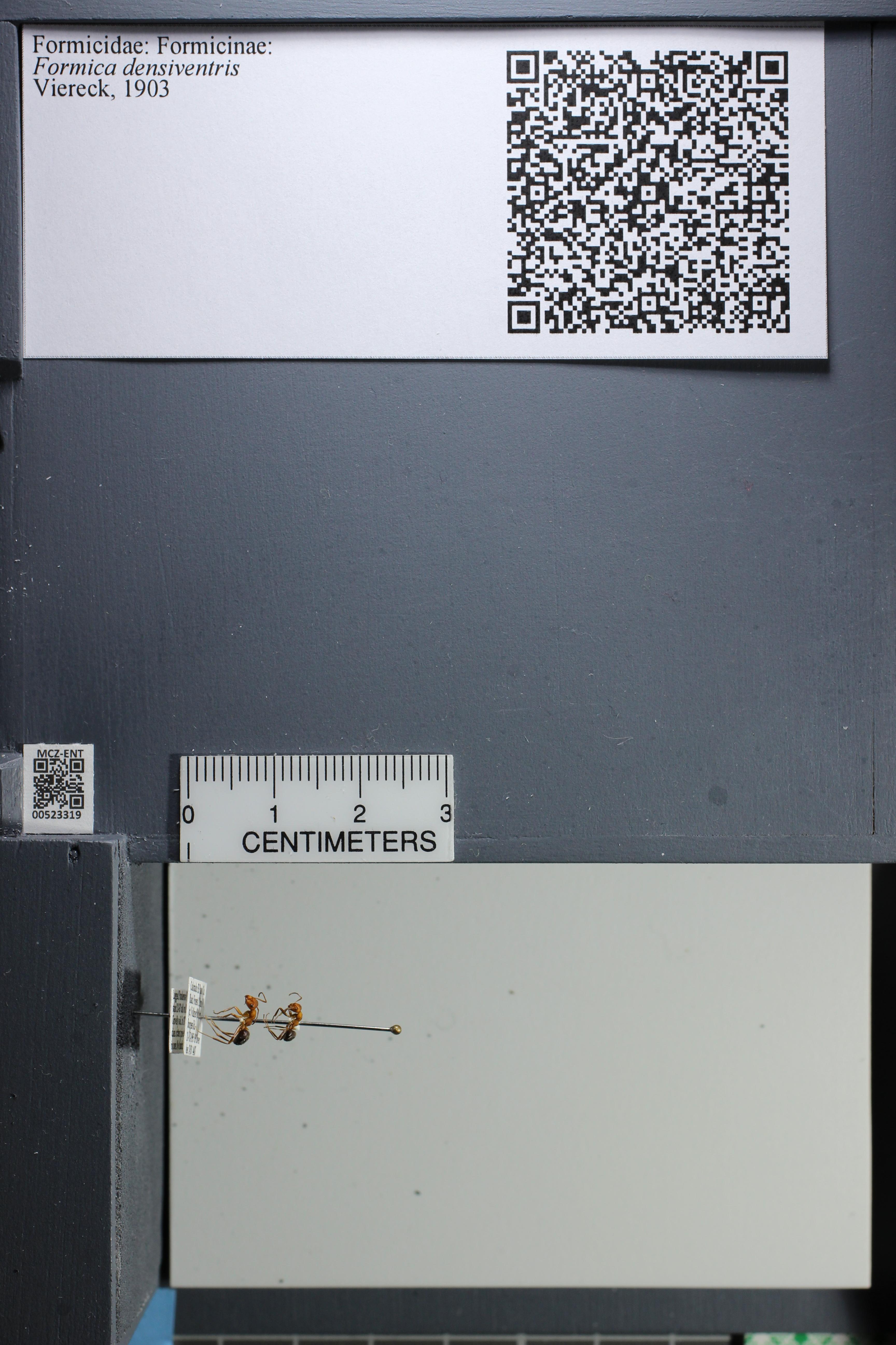 http://mczbase.mcz.harvard.edu/specimen_images/ent-formicidae/datashot/2014_02_26/IMG_300910.JPG