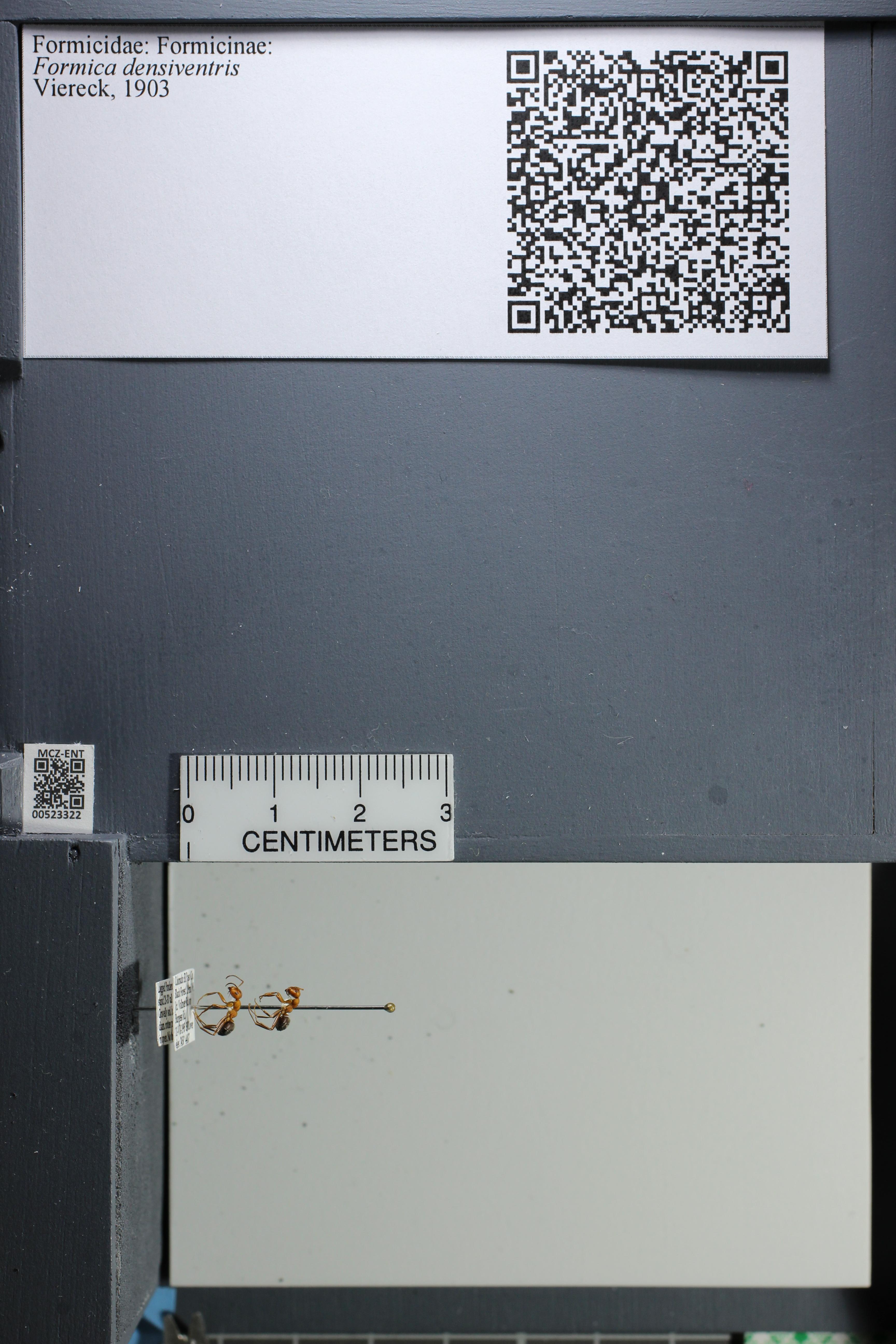 http://mczbase.mcz.harvard.edu/specimen_images/ent-formicidae/datashot/2014_02_26/IMG_300913.JPG