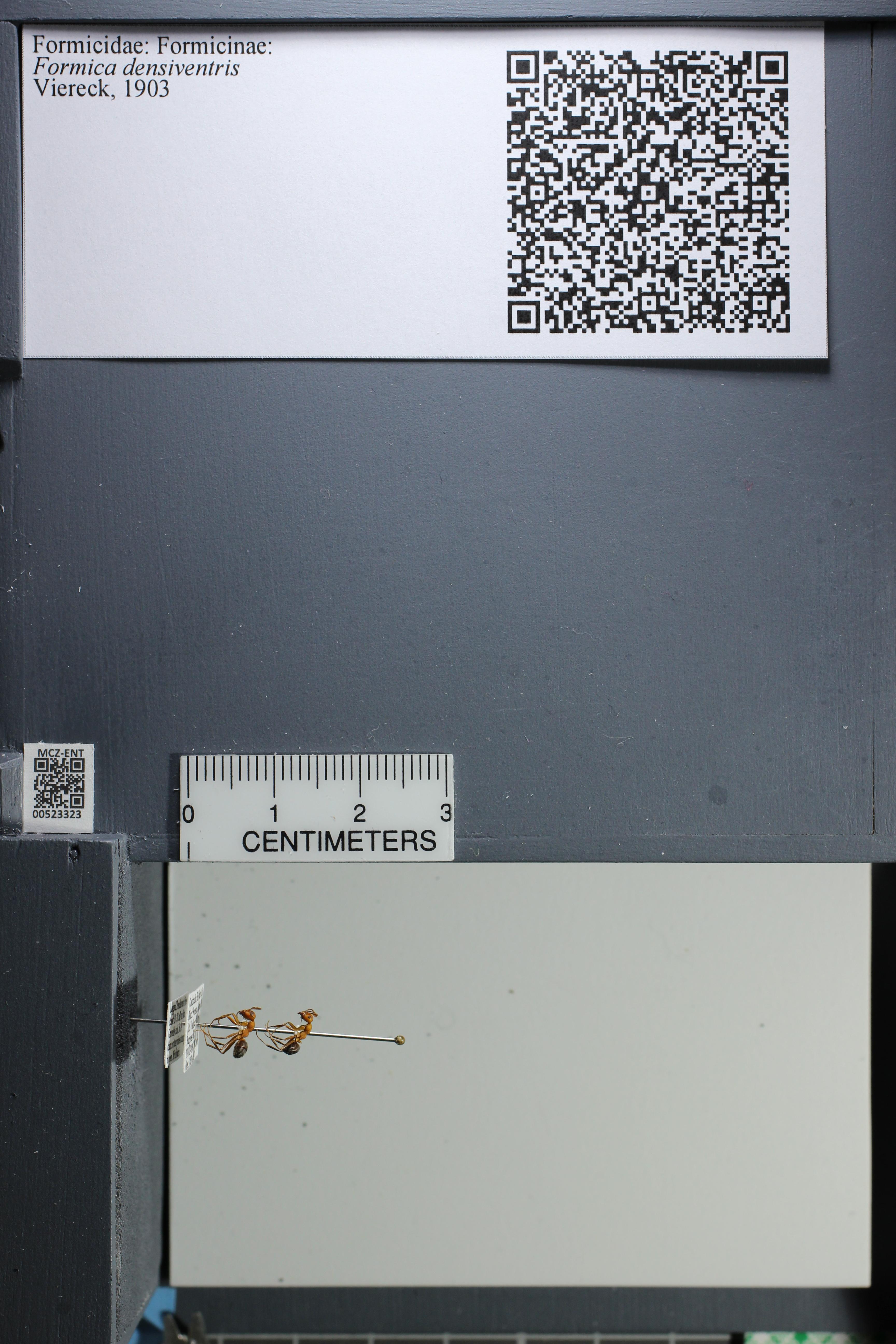 http://mczbase.mcz.harvard.edu/specimen_images/ent-formicidae/datashot/2014_02_26/IMG_300914.JPG