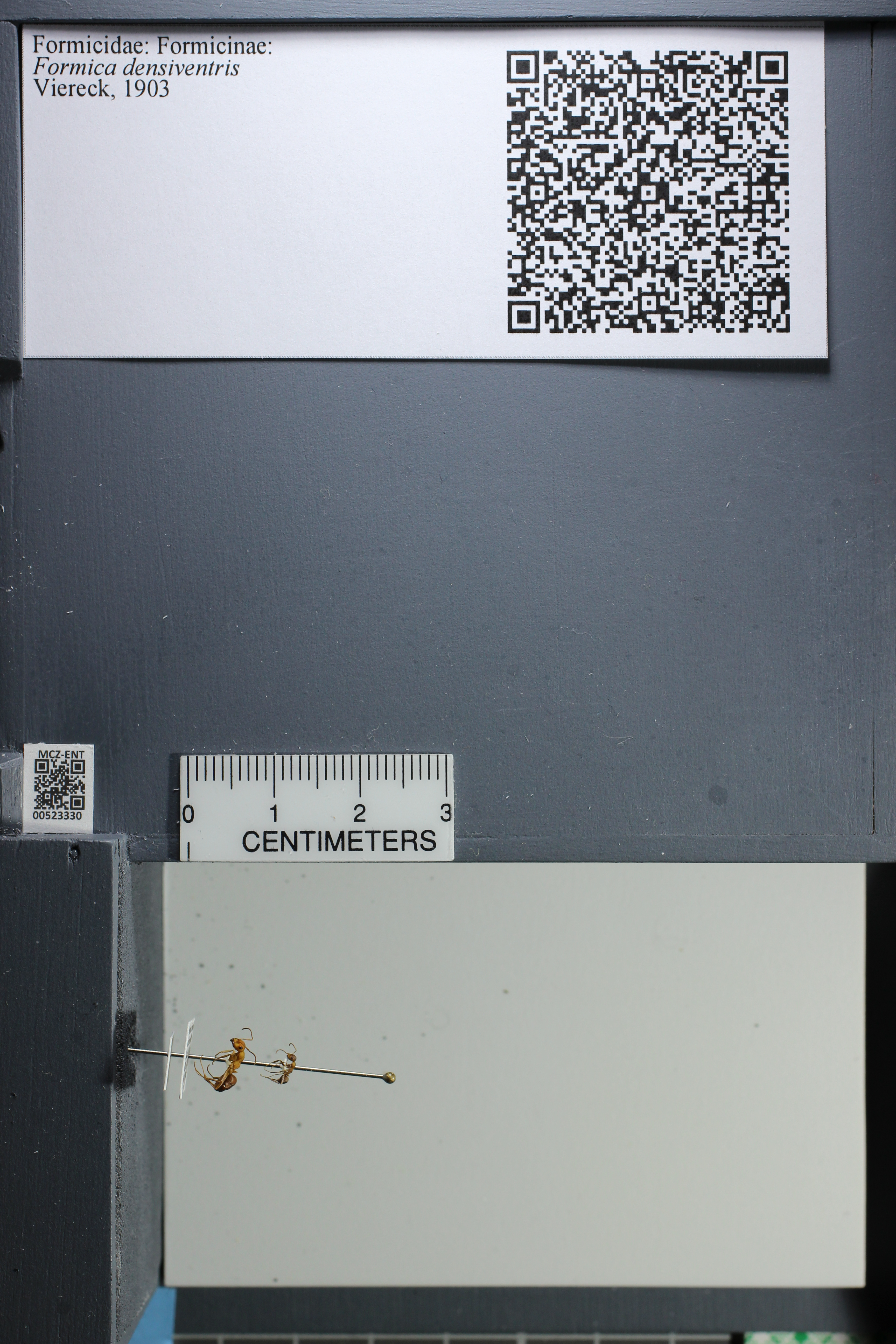 http://mczbase.mcz.harvard.edu/specimen_images/ent-formicidae/datashot/2014_02_26/IMG_300921.JPG