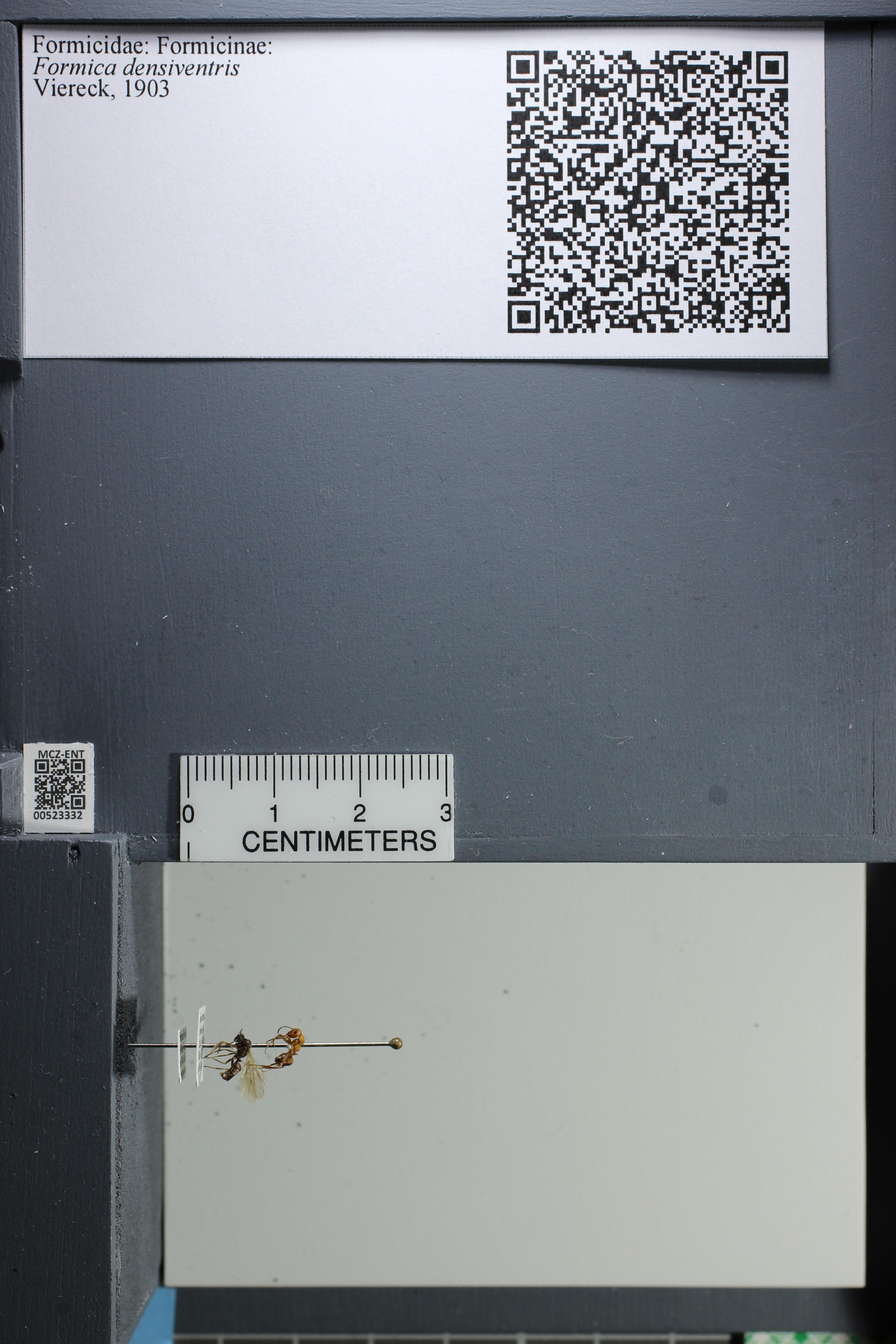 http://mczbase.mcz.harvard.edu/specimen_images/ent-formicidae/datashot/2014_02_26/IMG_300923.JPG