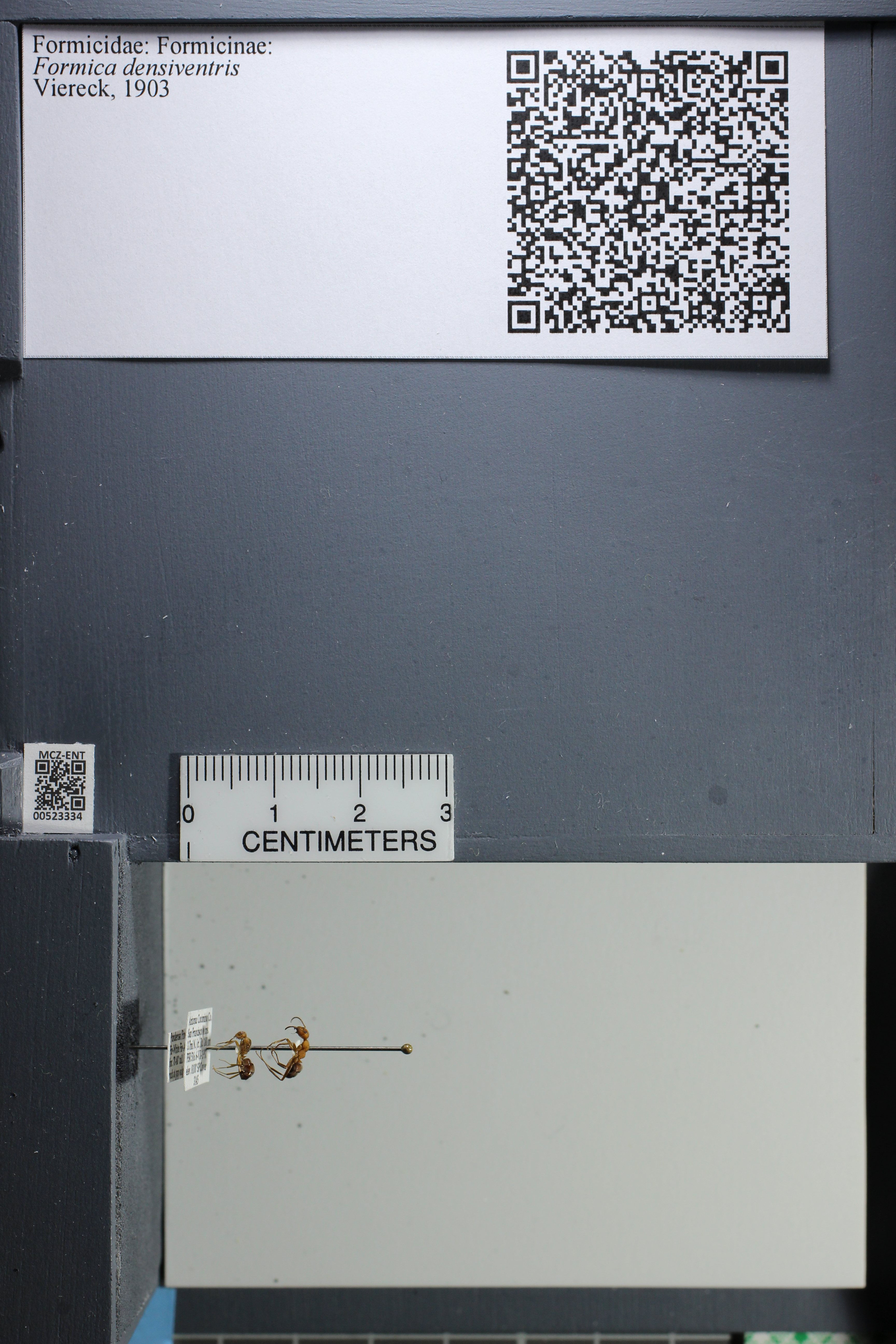 http://mczbase.mcz.harvard.edu/specimen_images/ent-formicidae/datashot/2014_02_26/IMG_300925.JPG