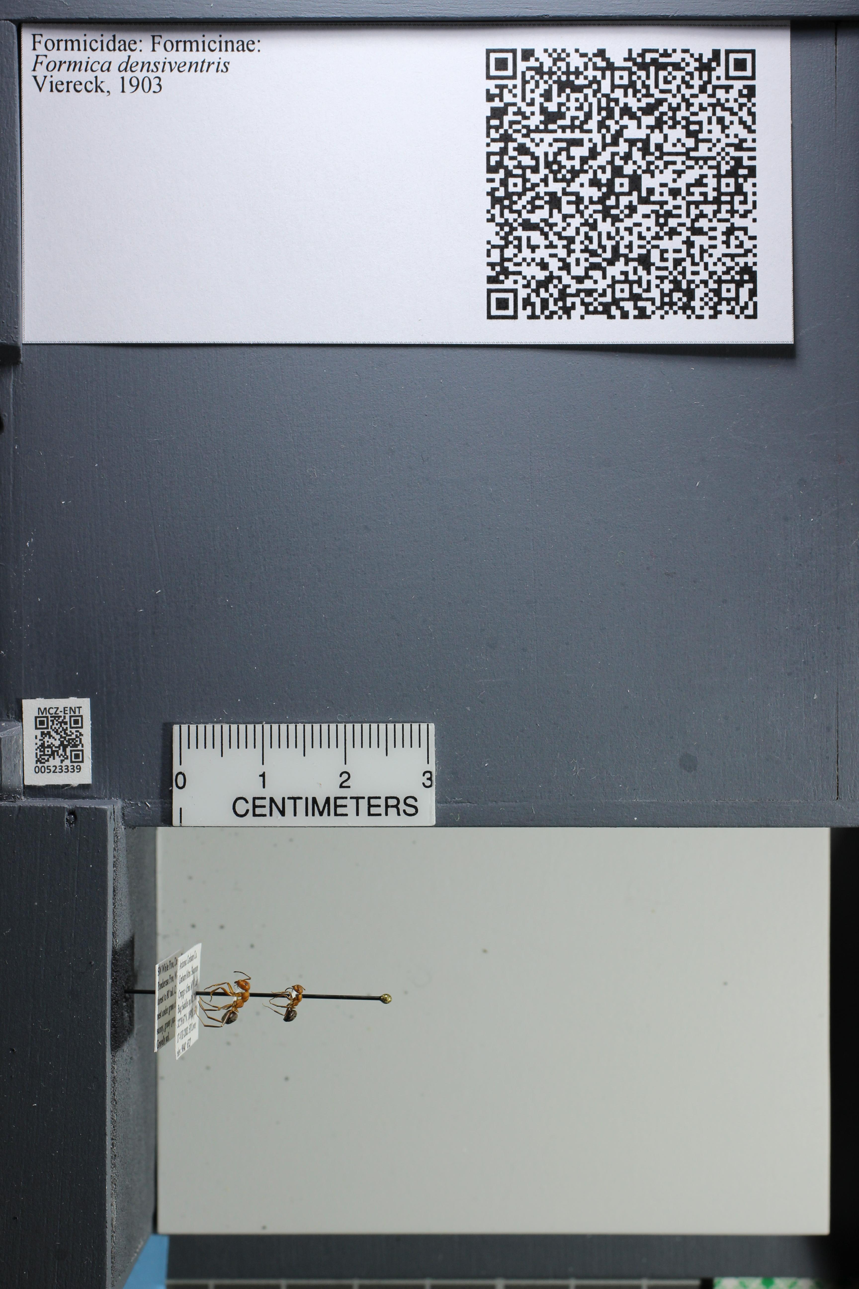 http://mczbase.mcz.harvard.edu/specimen_images/ent-formicidae/datashot/2014_02_26/IMG_300930.JPG