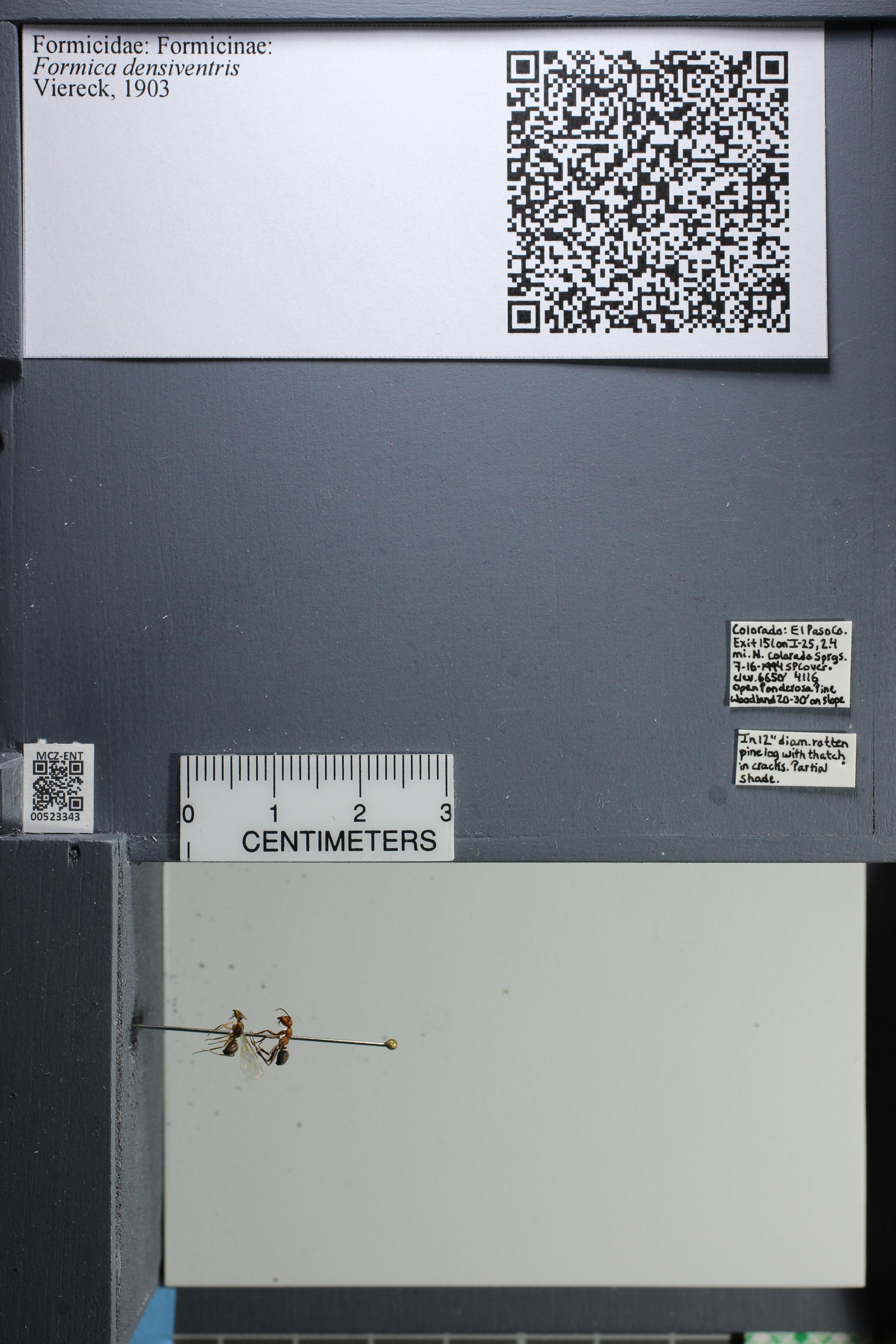 http://mczbase.mcz.harvard.edu/specimen_images/ent-formicidae/datashot/2014_02_26/IMG_300934.JPG