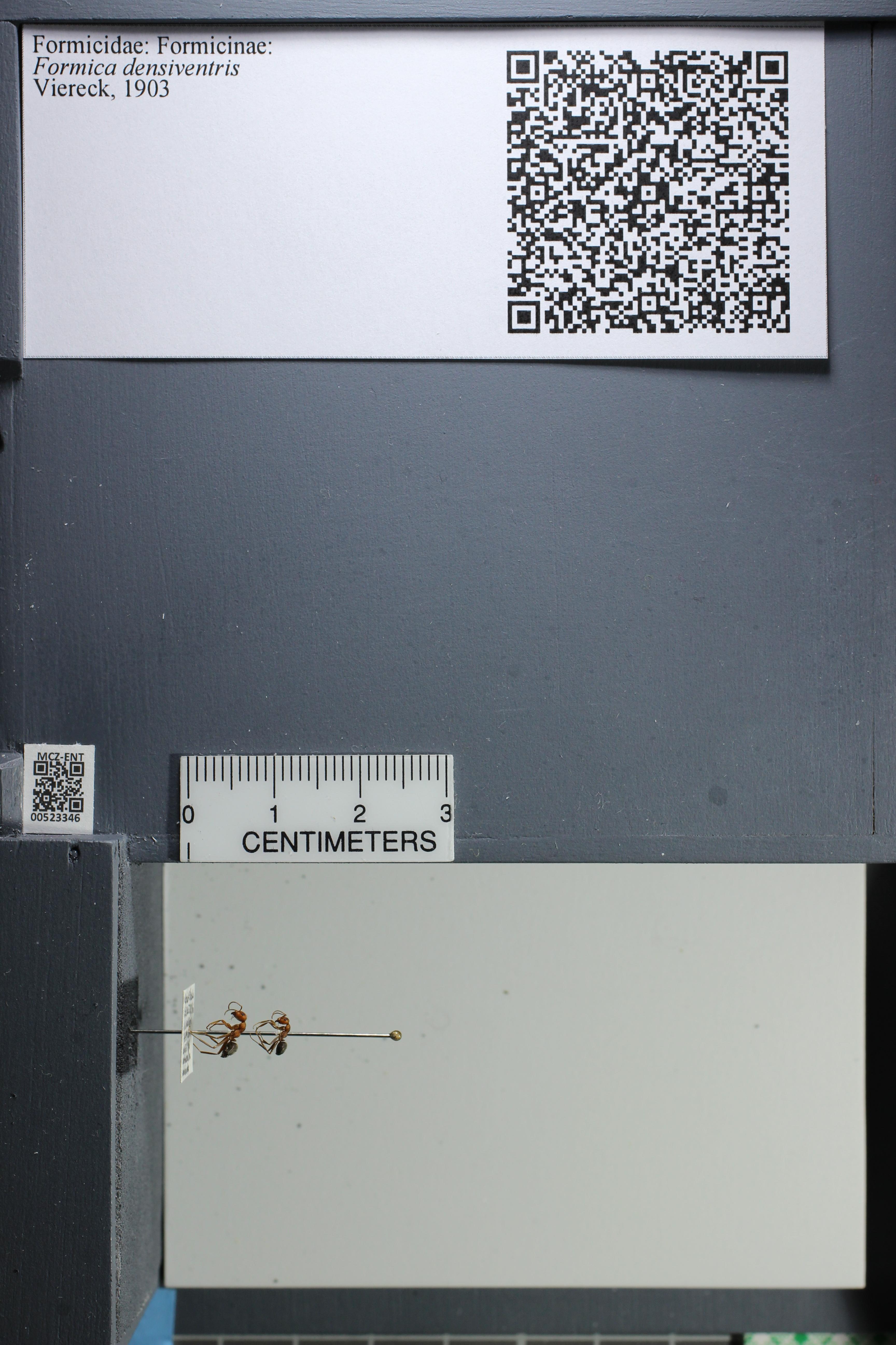 http://mczbase.mcz.harvard.edu/specimen_images/ent-formicidae/datashot/2014_02_26/IMG_300937.JPG