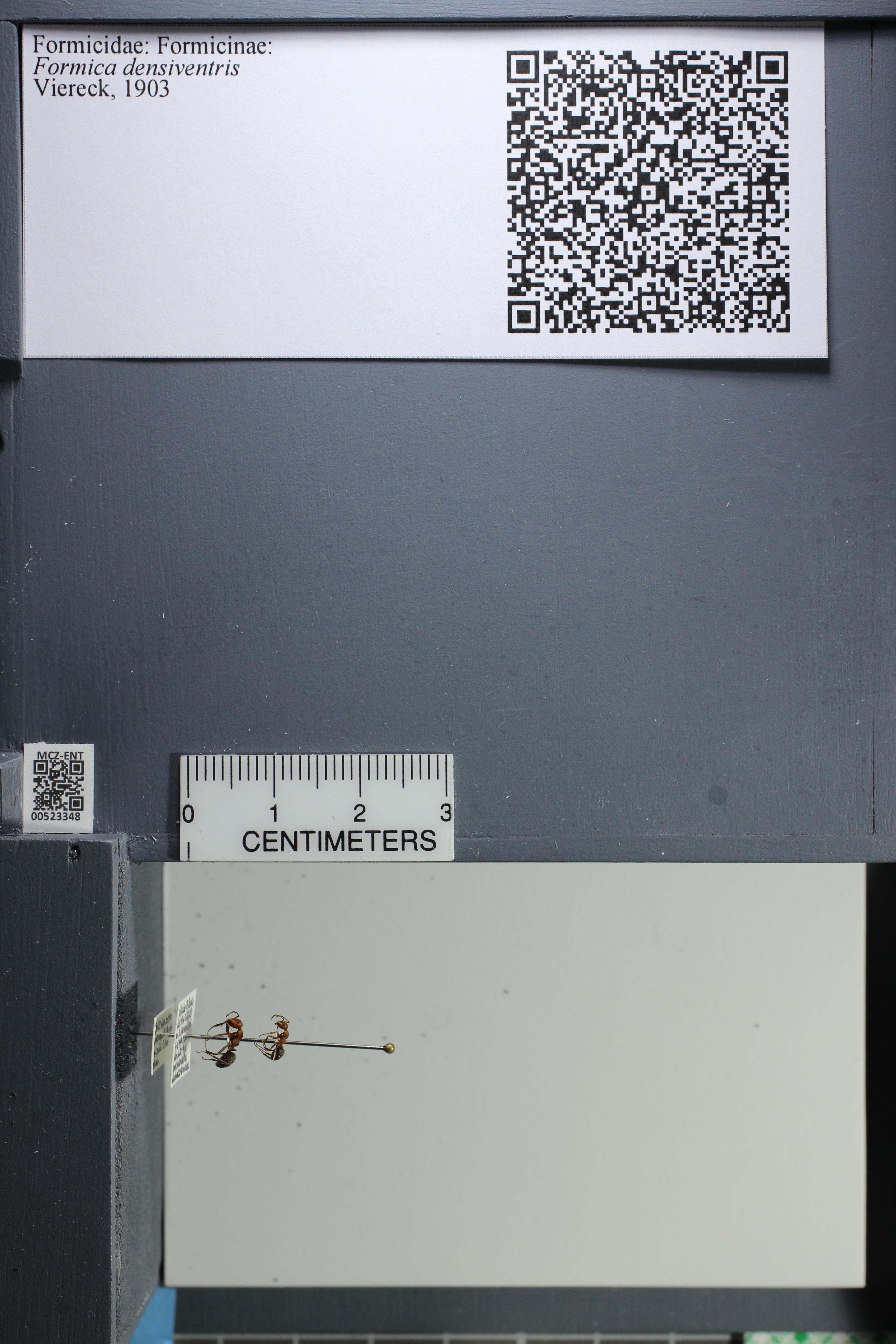 http://mczbase.mcz.harvard.edu/specimen_images/ent-formicidae/datashot/2014_02_26/IMG_300939.JPG