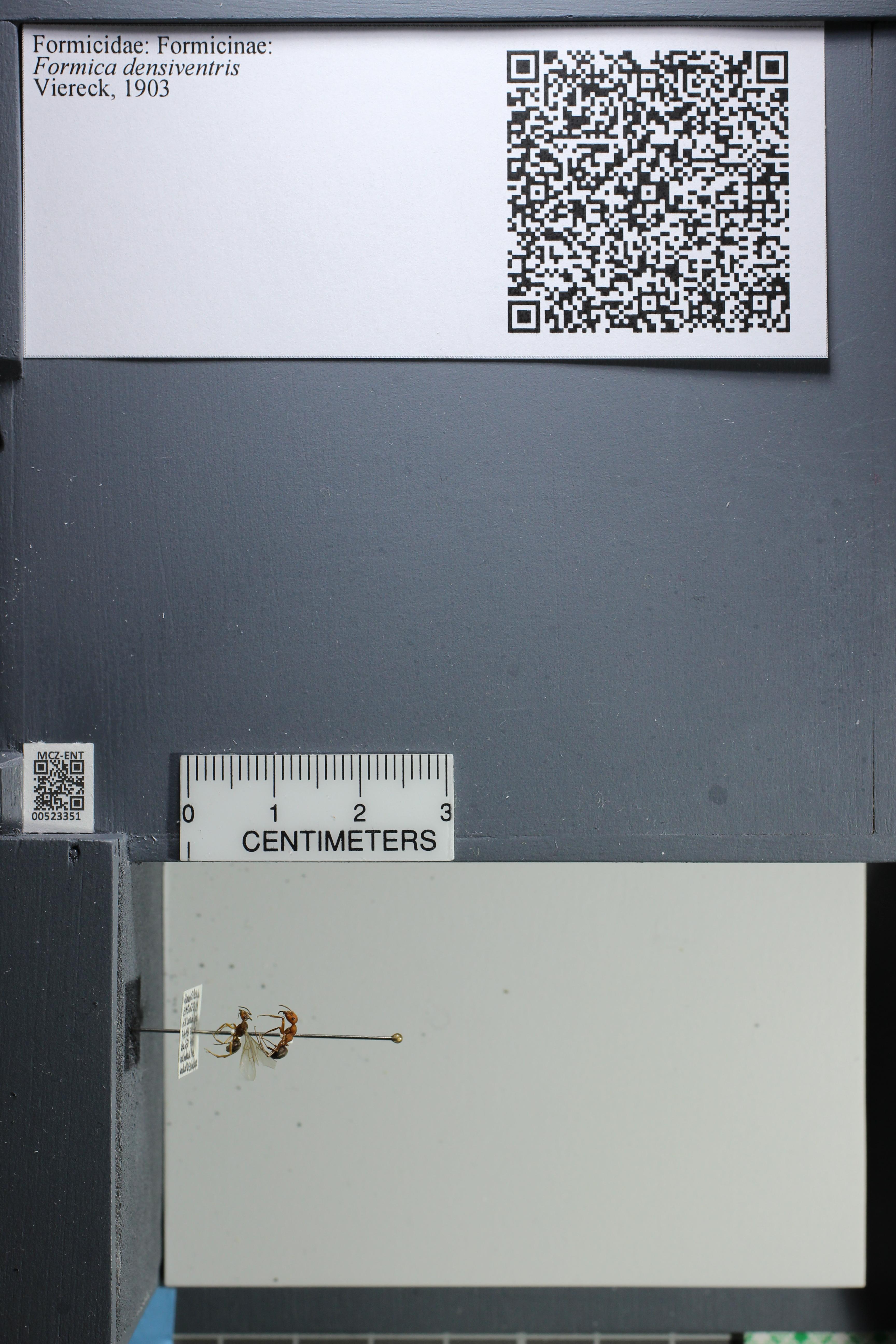 http://mczbase.mcz.harvard.edu/specimen_images/ent-formicidae/datashot/2014_02_26/IMG_300942.JPG