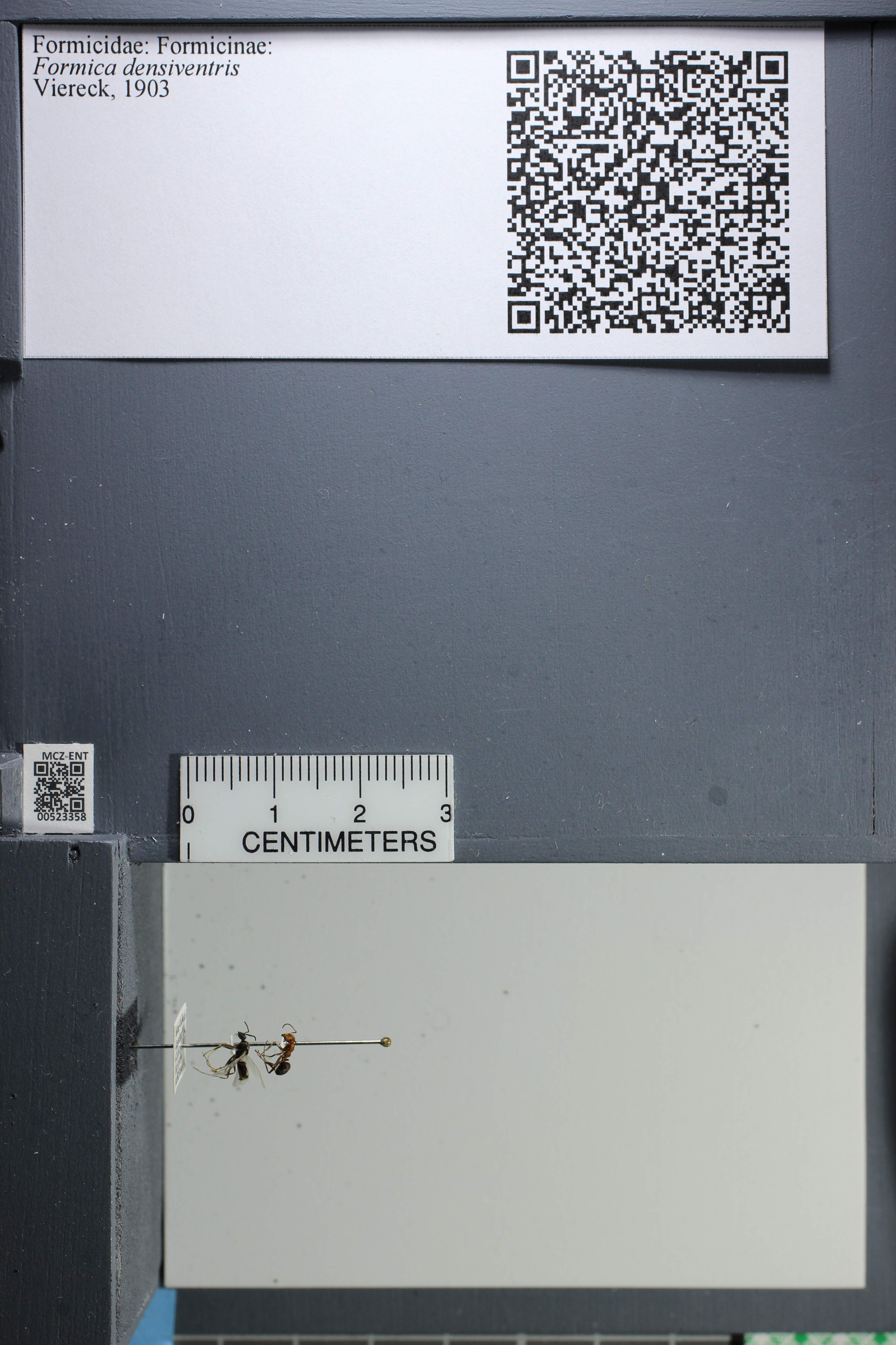 http://mczbase.mcz.harvard.edu/specimen_images/ent-formicidae/datashot/2014_02_26/IMG_300950.JPG
