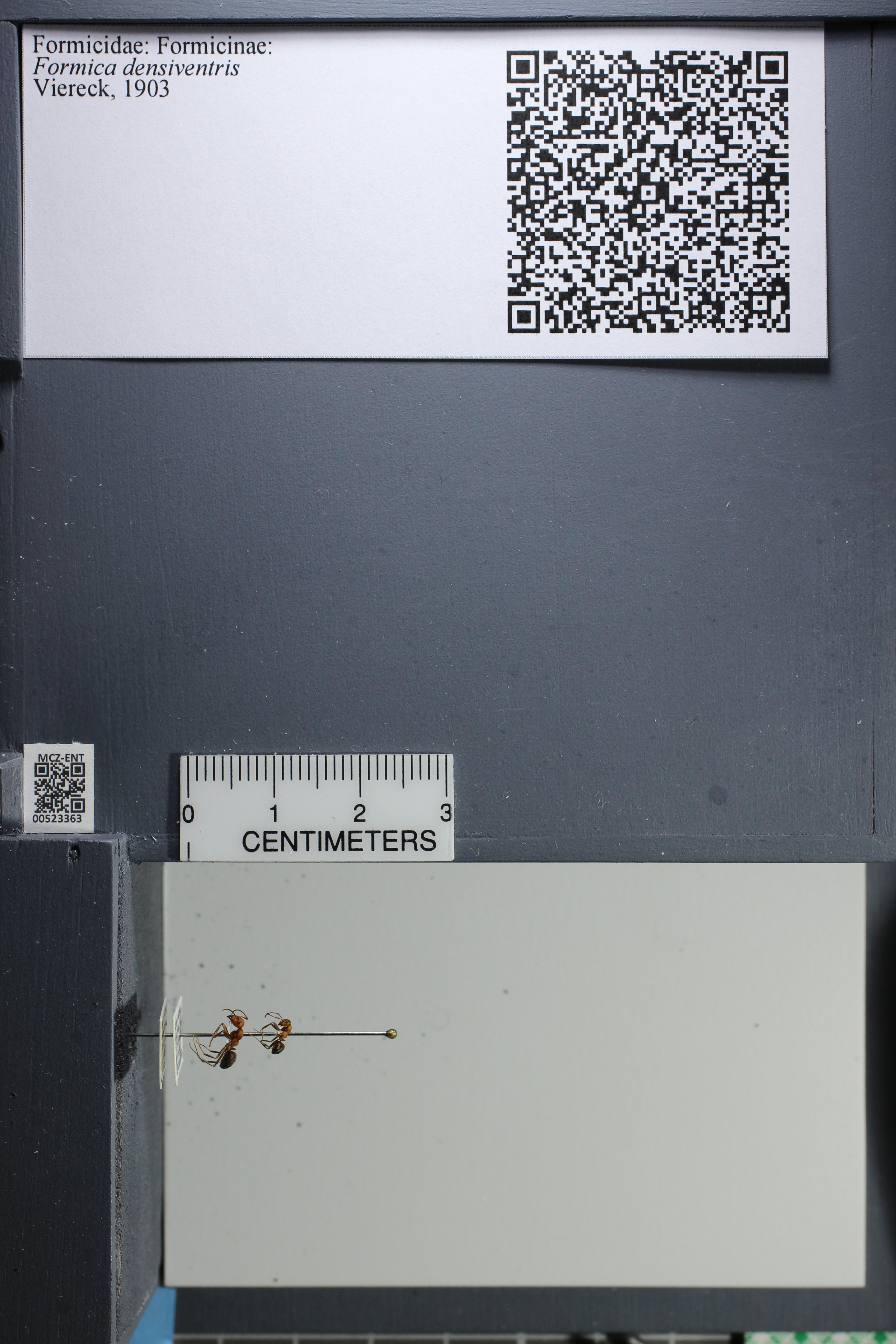 http://mczbase.mcz.harvard.edu/specimen_images/ent-formicidae/datashot/2014_02_26/IMG_300955.JPG