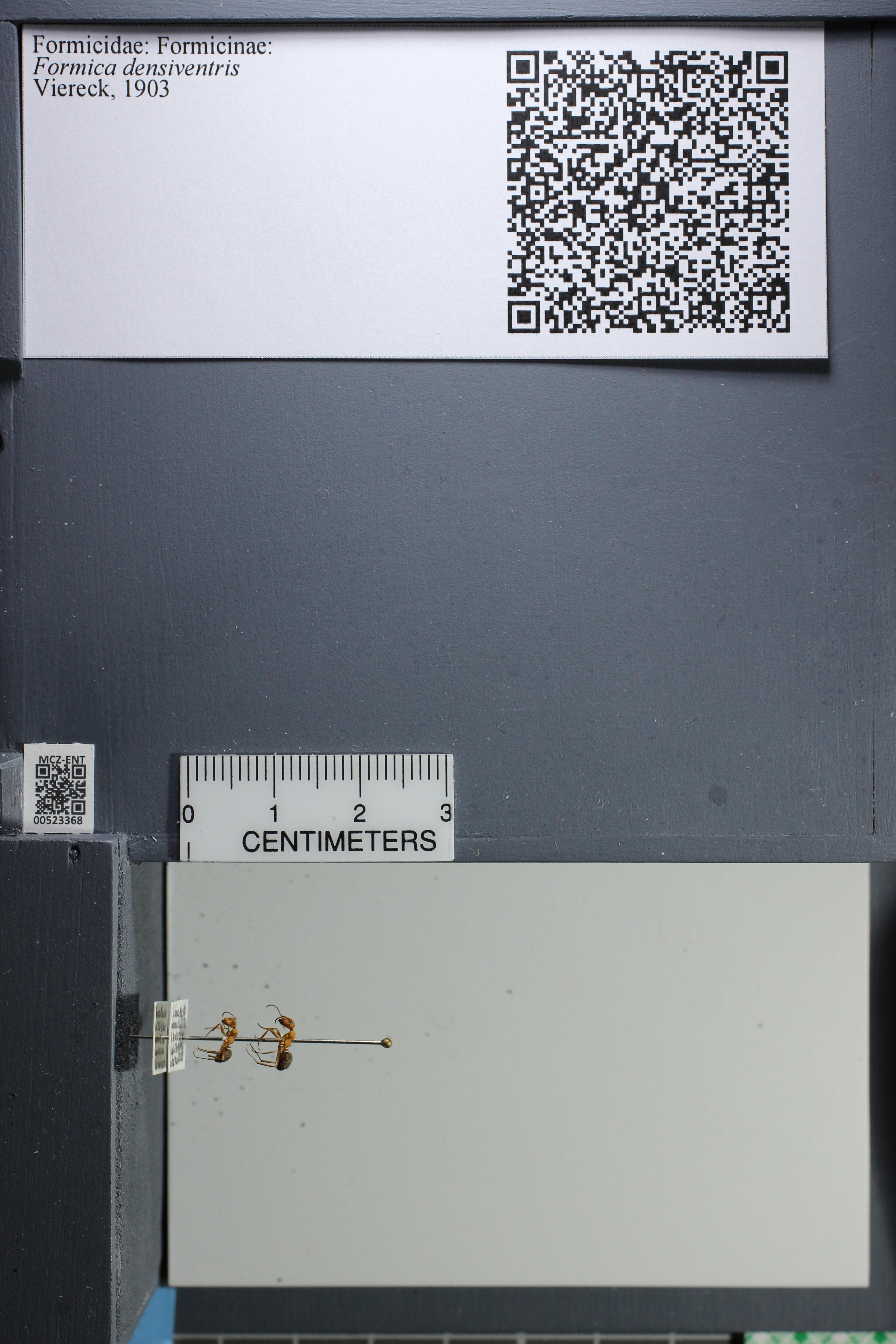 http://mczbase.mcz.harvard.edu/specimen_images/ent-formicidae/datashot/2014_02_26/IMG_300960.JPG