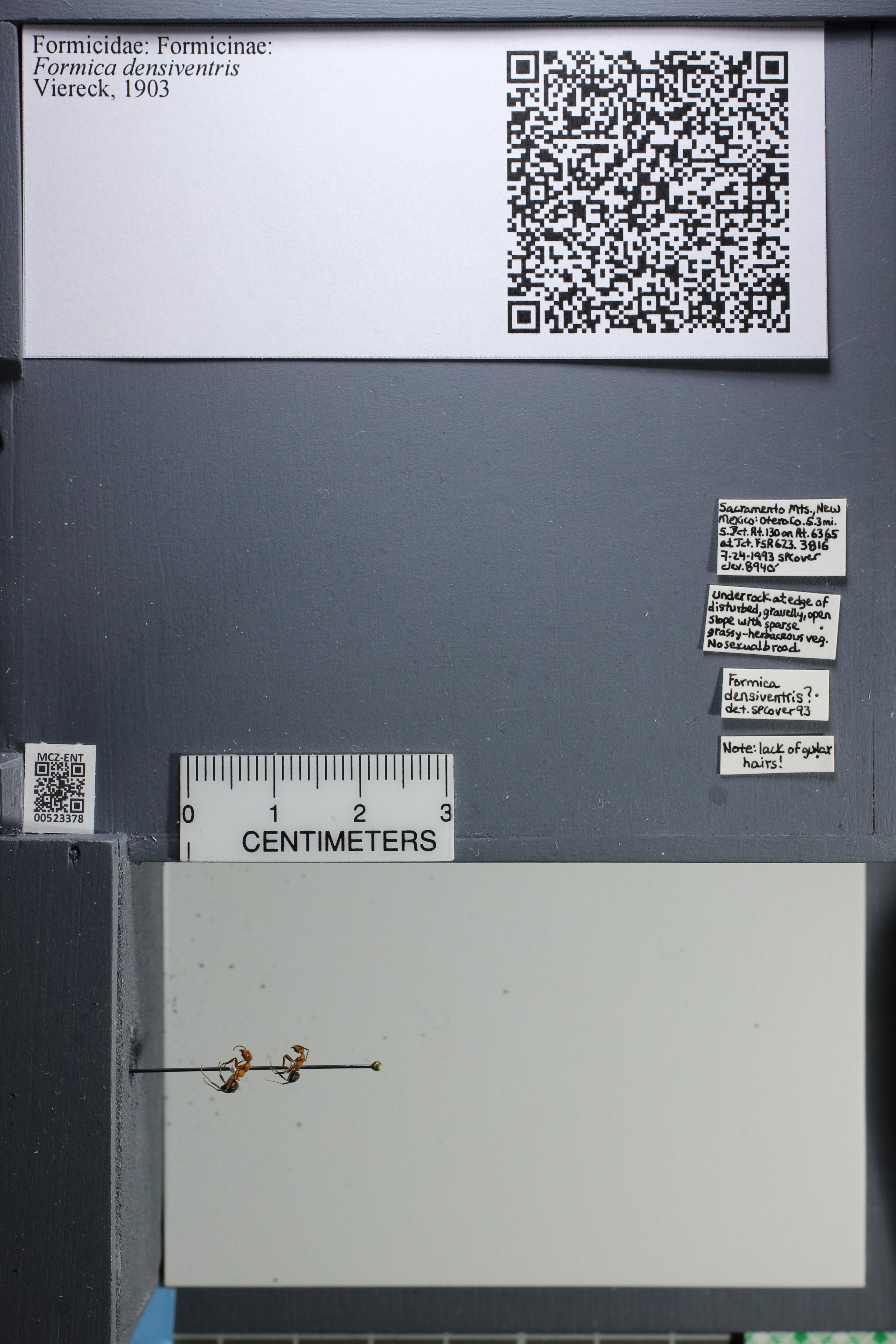 http://mczbase.mcz.harvard.edu/specimen_images/ent-formicidae/datashot/2014_02_26/IMG_300970.JPG