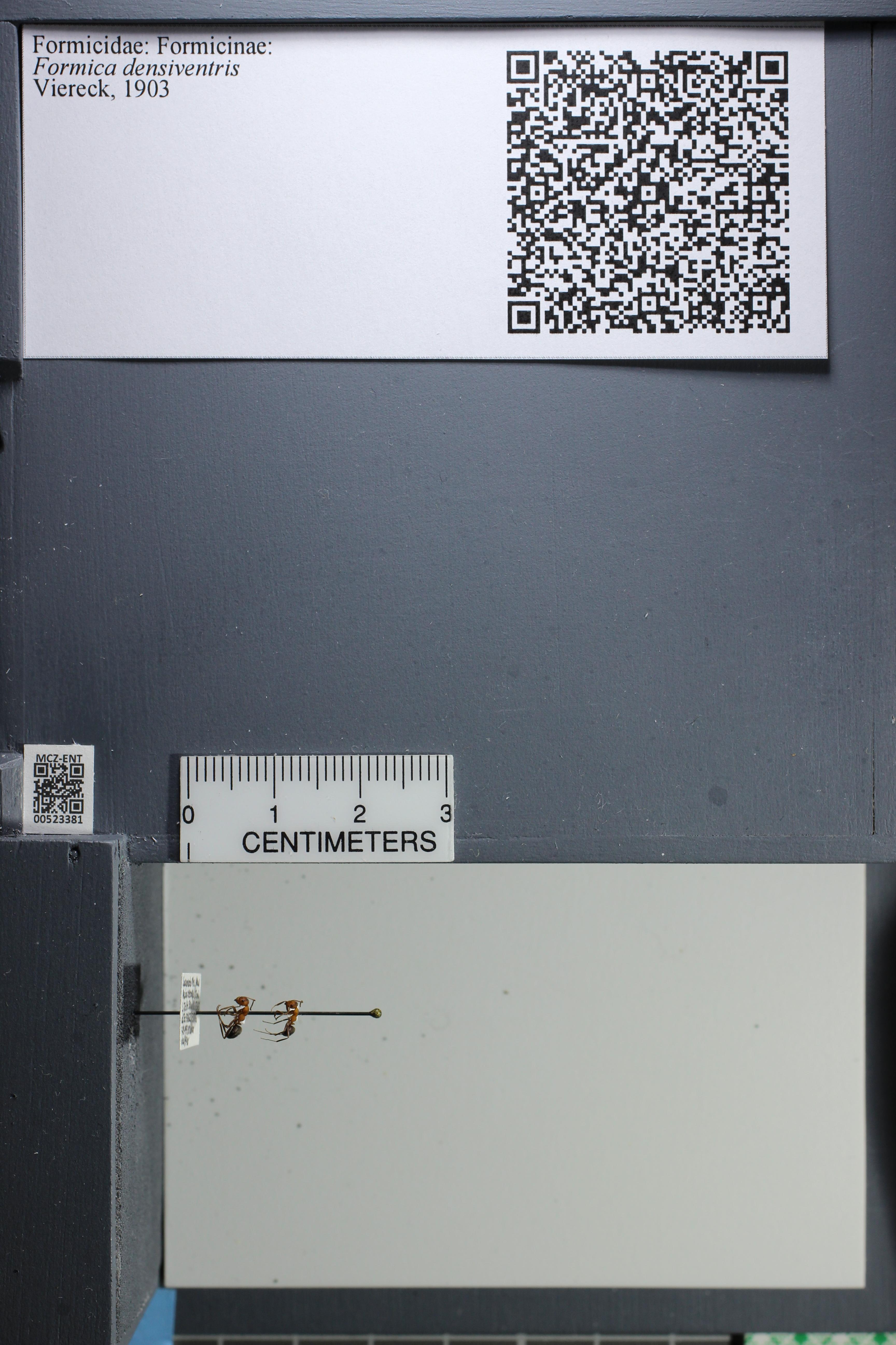 http://mczbase.mcz.harvard.edu/specimen_images/ent-formicidae/datashot/2014_02_26/IMG_300973.JPG