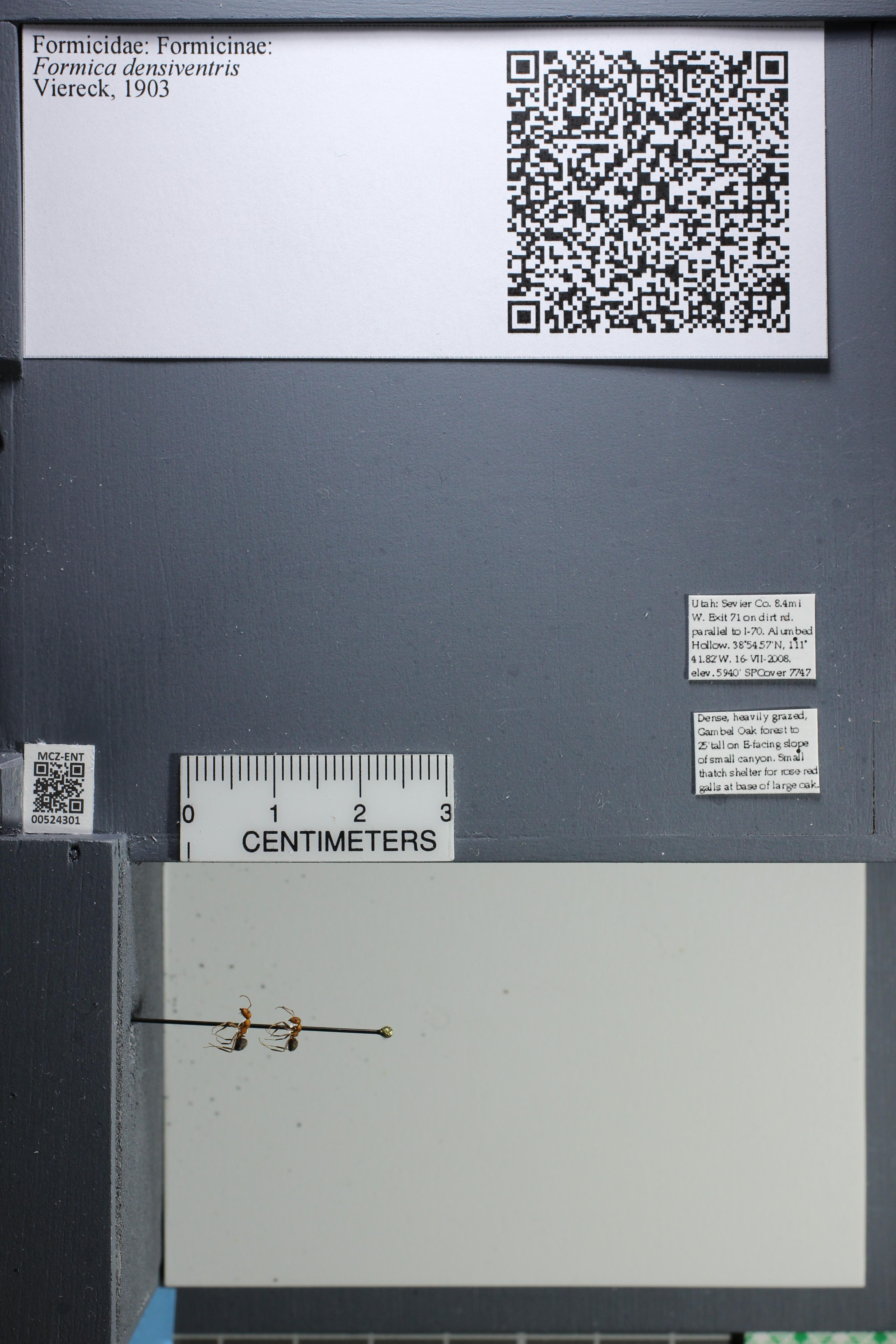 http://mczbase.mcz.harvard.edu/specimen_images/ent-formicidae/datashot/2014_02_26/IMG_300994.JPG