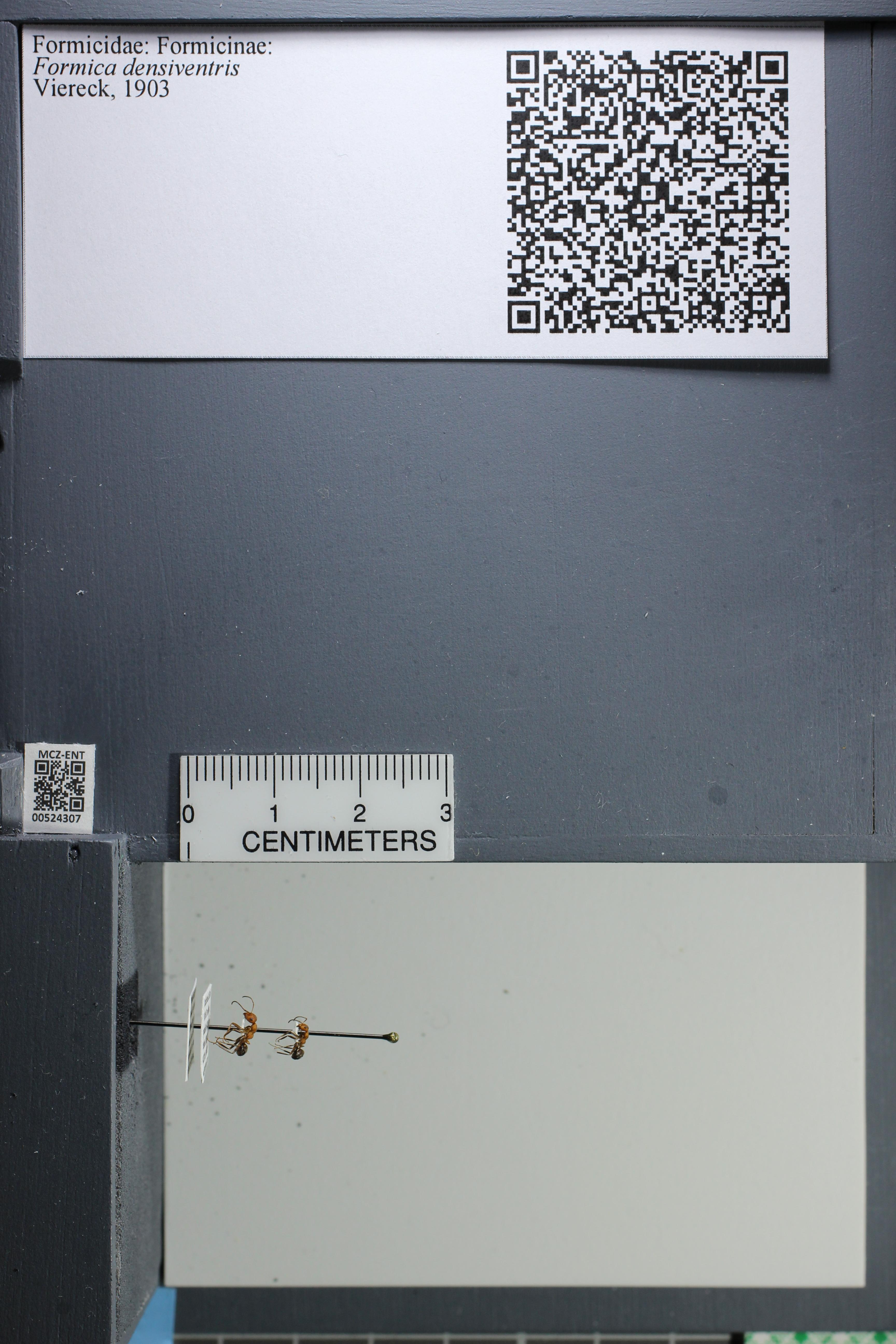http://mczbase.mcz.harvard.edu/specimen_images/ent-formicidae/datashot/2014_02_26/IMG_301001.JPG