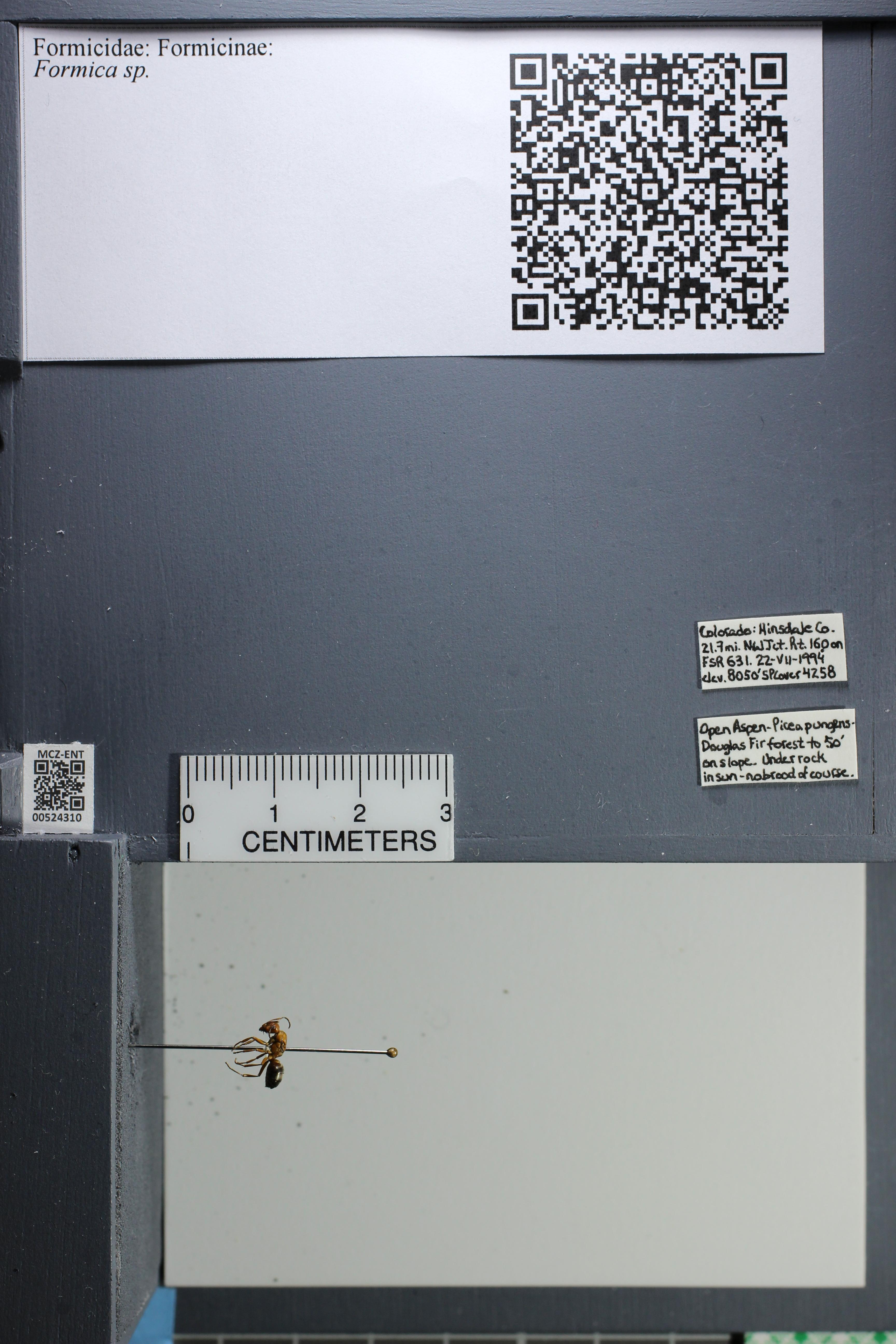http://mczbase.mcz.harvard.edu/specimen_images/ent-formicidae/datashot/2014_02_26/IMG_301004.JPG