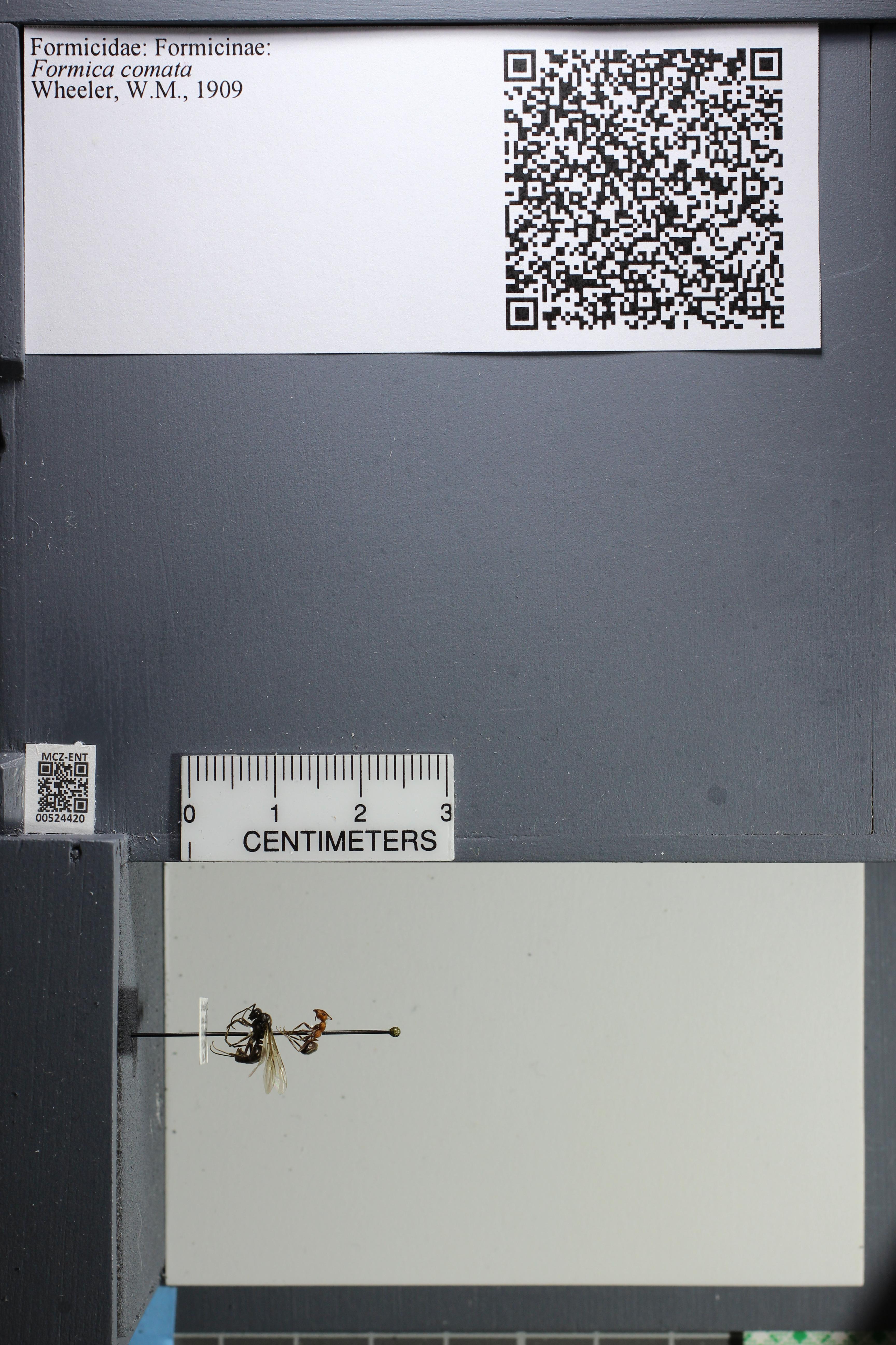 http://mczbase.mcz.harvard.edu/specimen_images/ent-formicidae/datashot/2014_03_05/IMG_301119.JPG