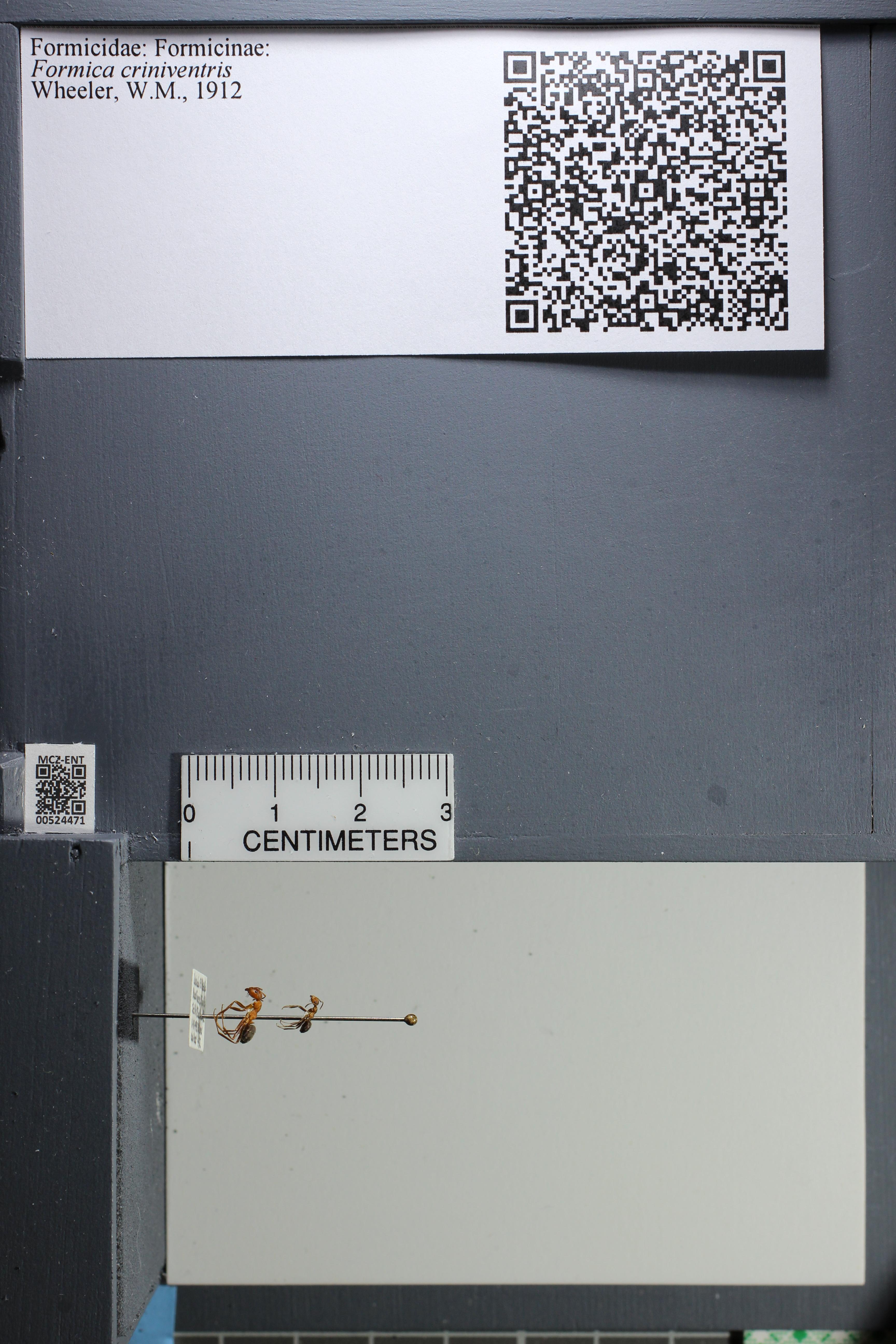 http://mczbase.mcz.harvard.edu/specimen_images/ent-formicidae/datashot/2014_03_05/IMG_301175.JPG