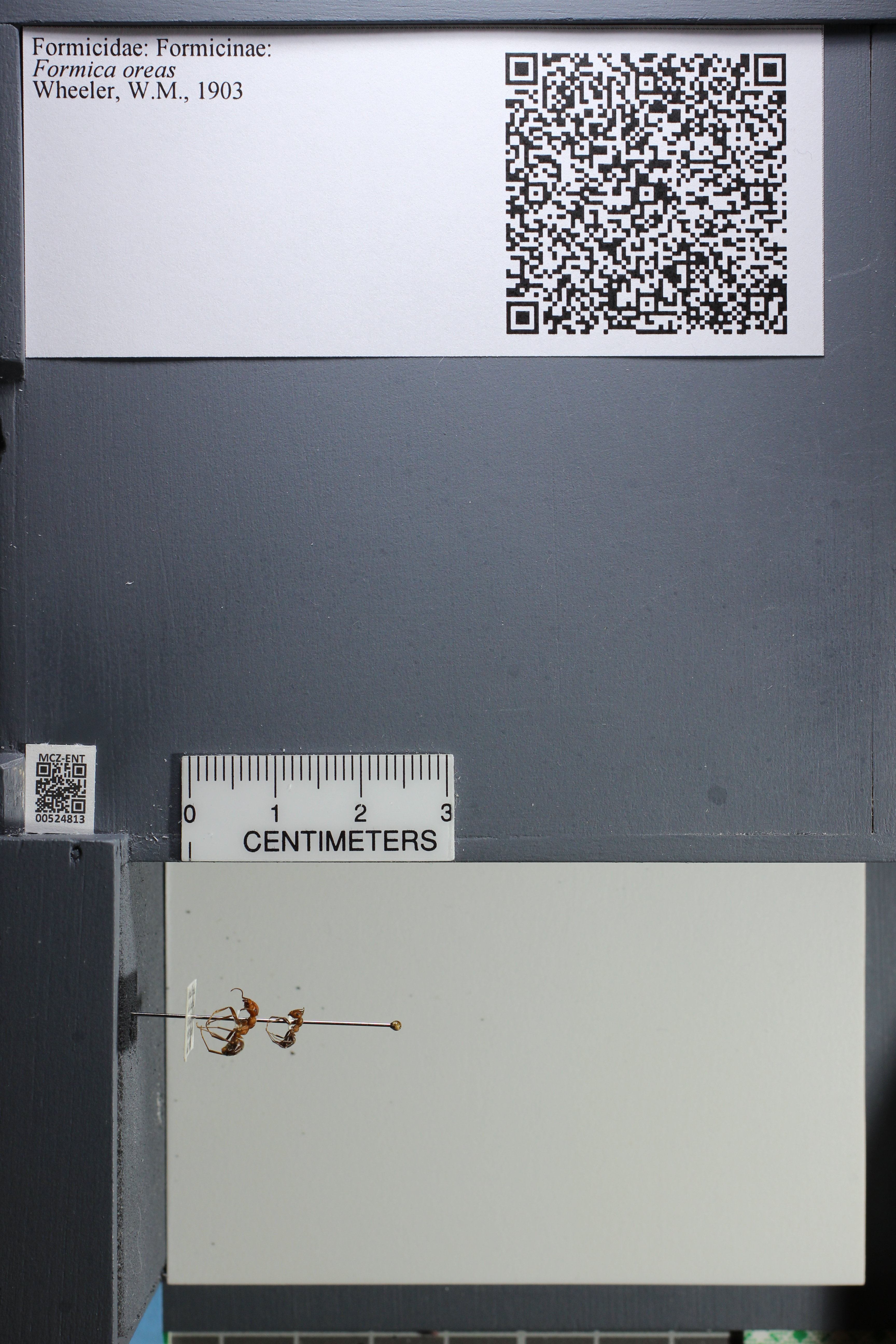 http://mczbase.mcz.harvard.edu/specimen_images/ent-formicidae/datashot/2014_03_11/IMG_301463.JPG