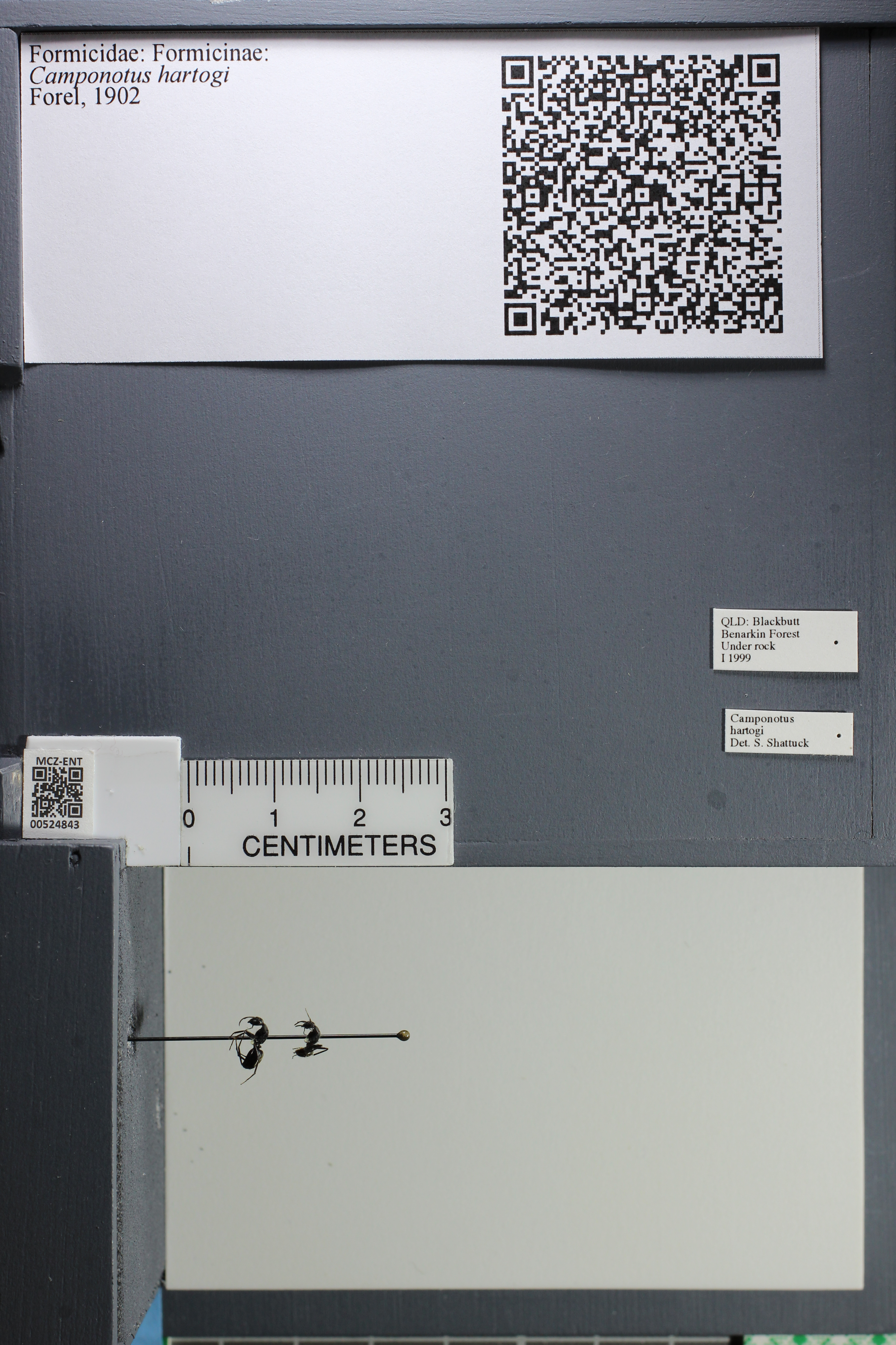 http://mczbase.mcz.harvard.edu/specimen_images/ent-formicidae/datashot/2014_04_07/IMG_301792.JPG