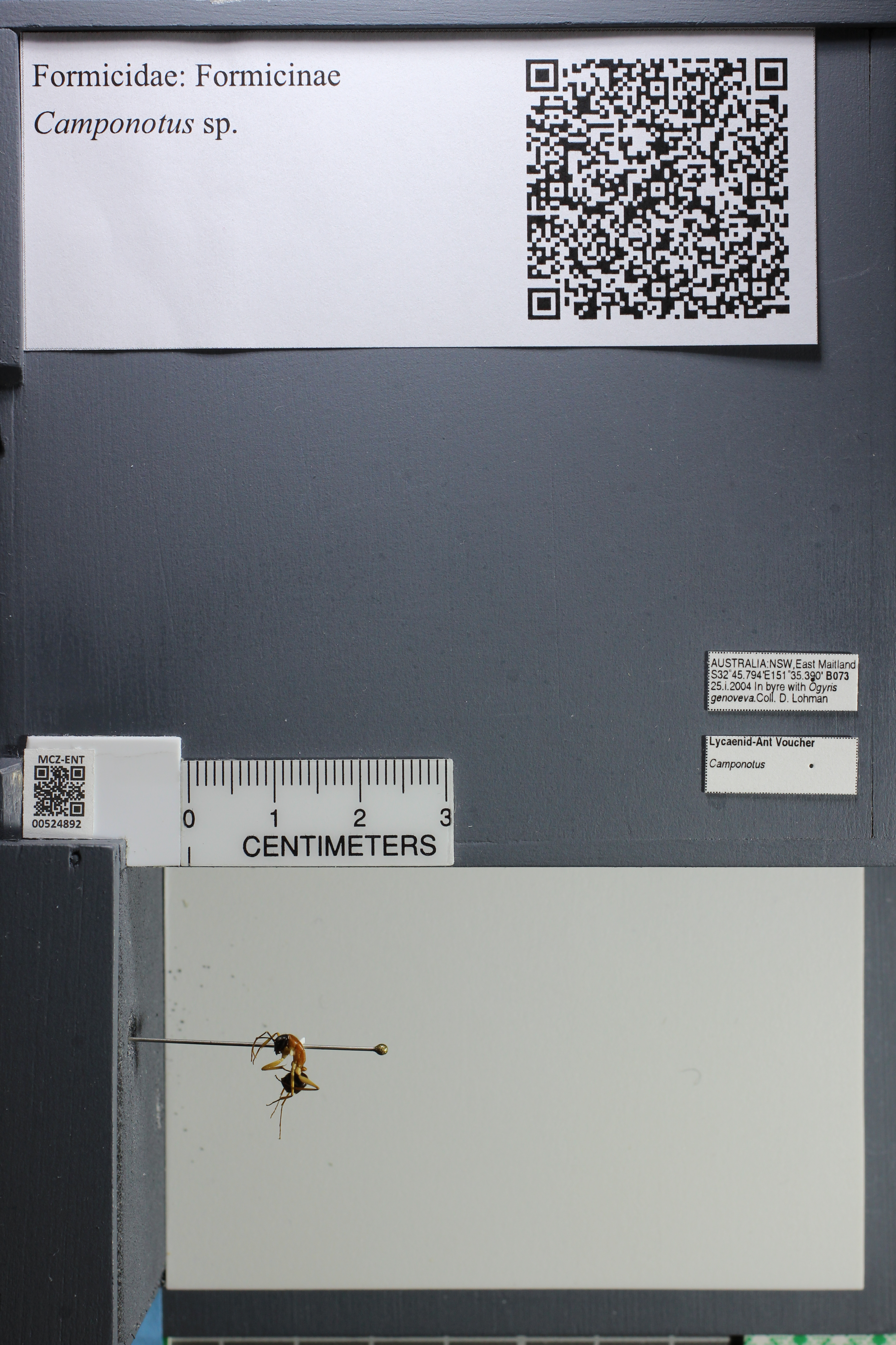 http://mczbase.mcz.harvard.edu/specimen_images/ent-formicidae/datashot/2014_04_07/IMG_301841.JPG