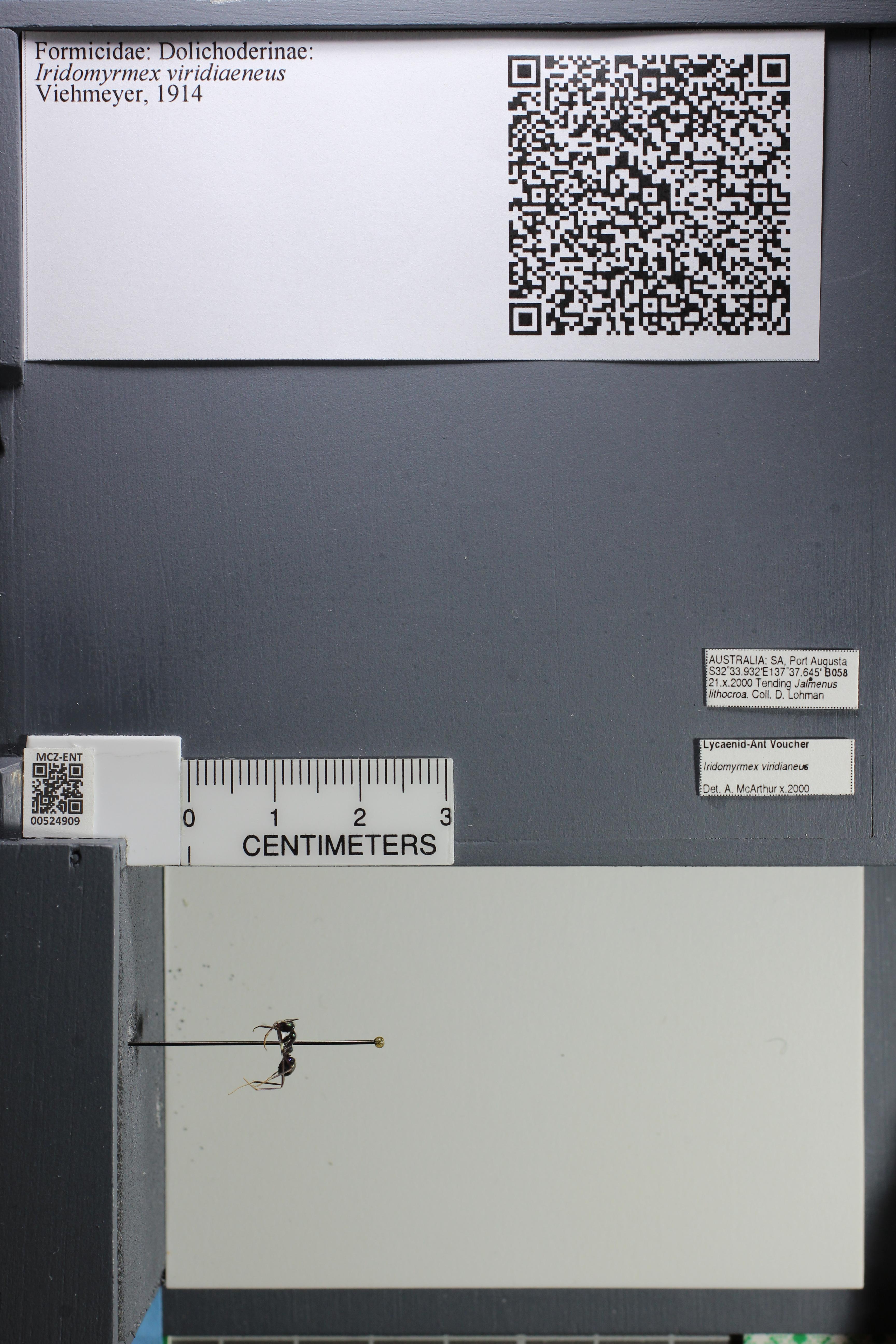 http://mczbase.mcz.harvard.edu/specimen_images/ent-formicidae/datashot/2014_04_08/IMG_301858.JPG