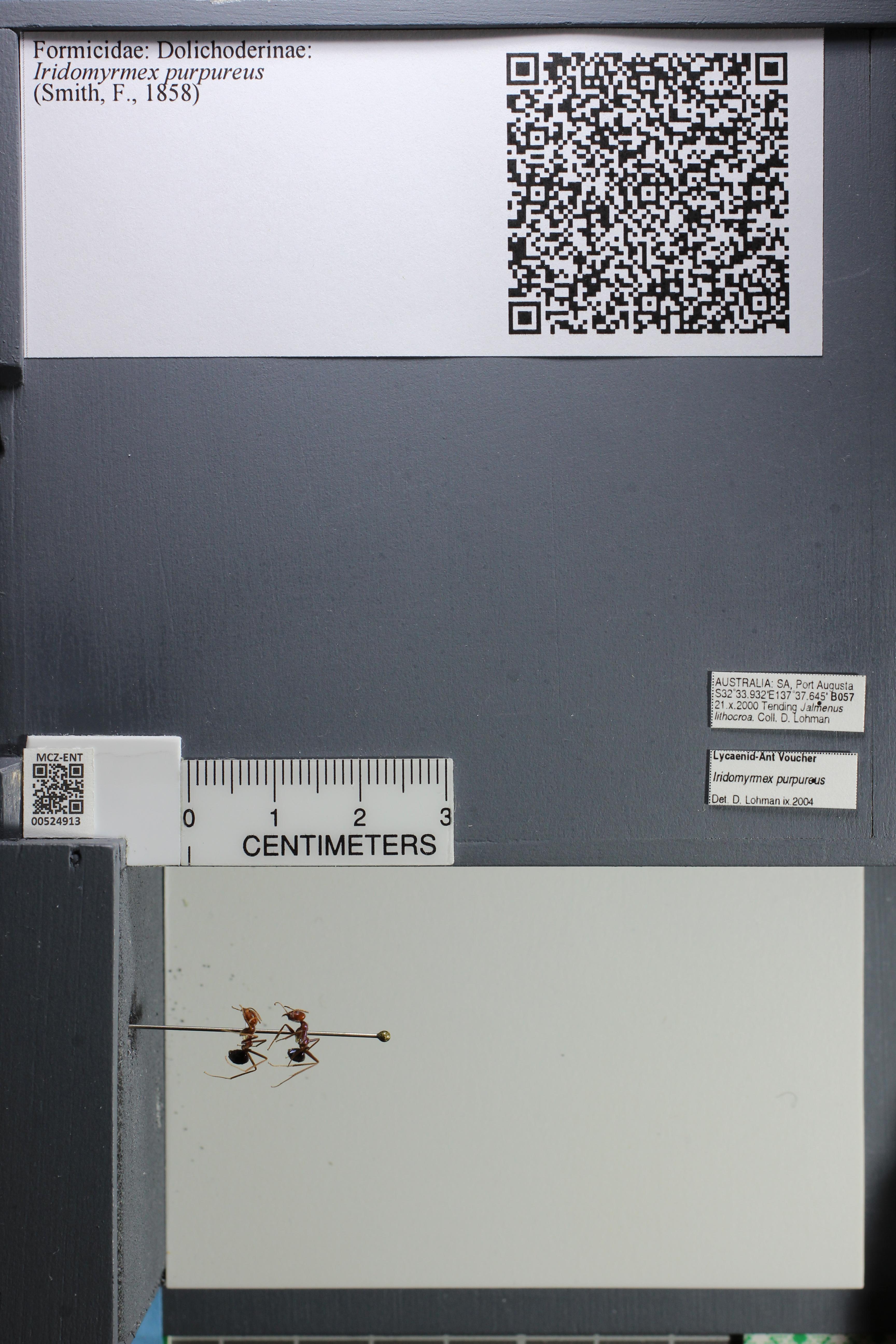 http://mczbase.mcz.harvard.edu/specimen_images/ent-formicidae/datashot/2014_04_08/IMG_301862.JPG