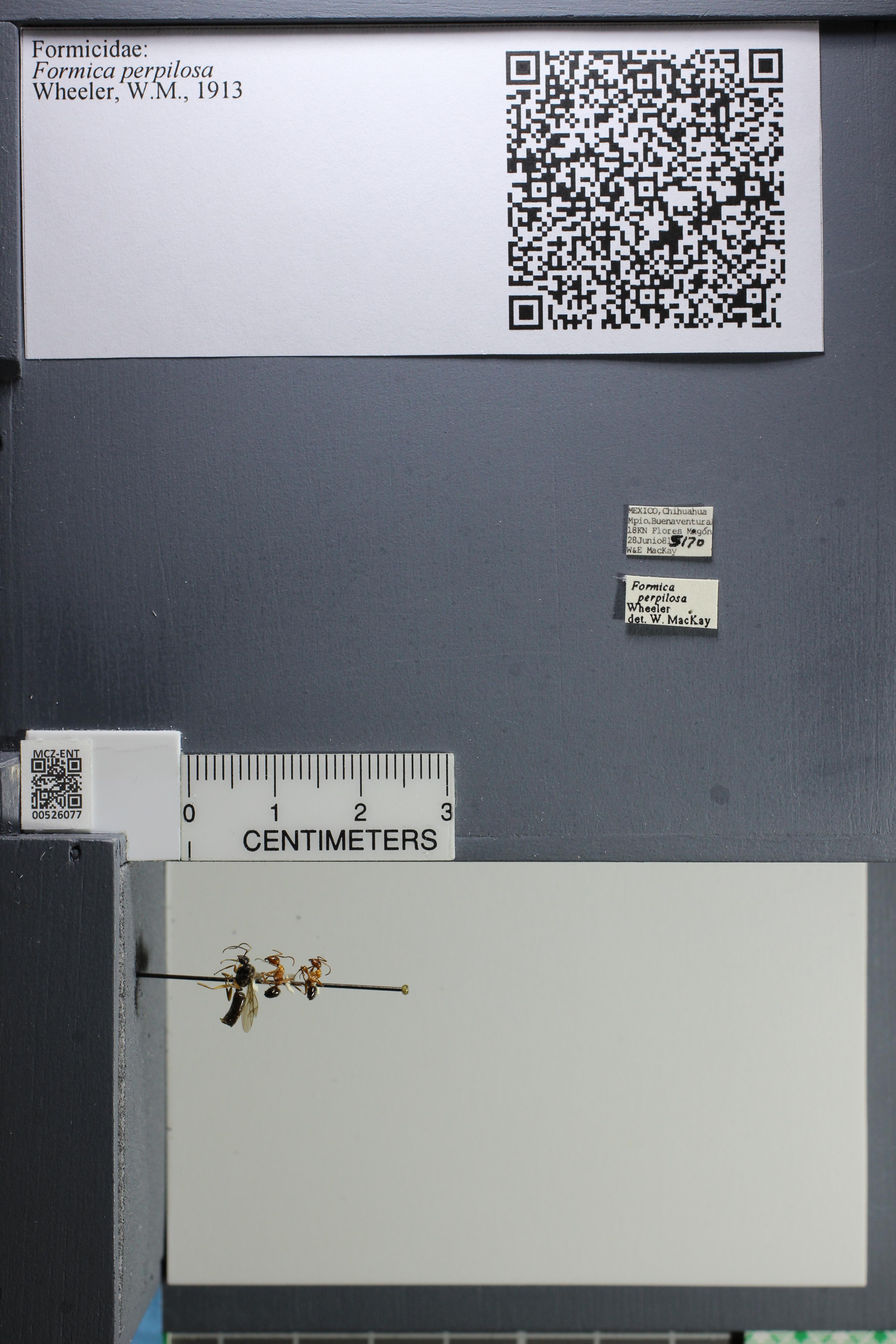 http://mczbase.mcz.harvard.edu/specimen_images/ent-formicidae/datashot/2014_07_21/IMG_302188.JPG
