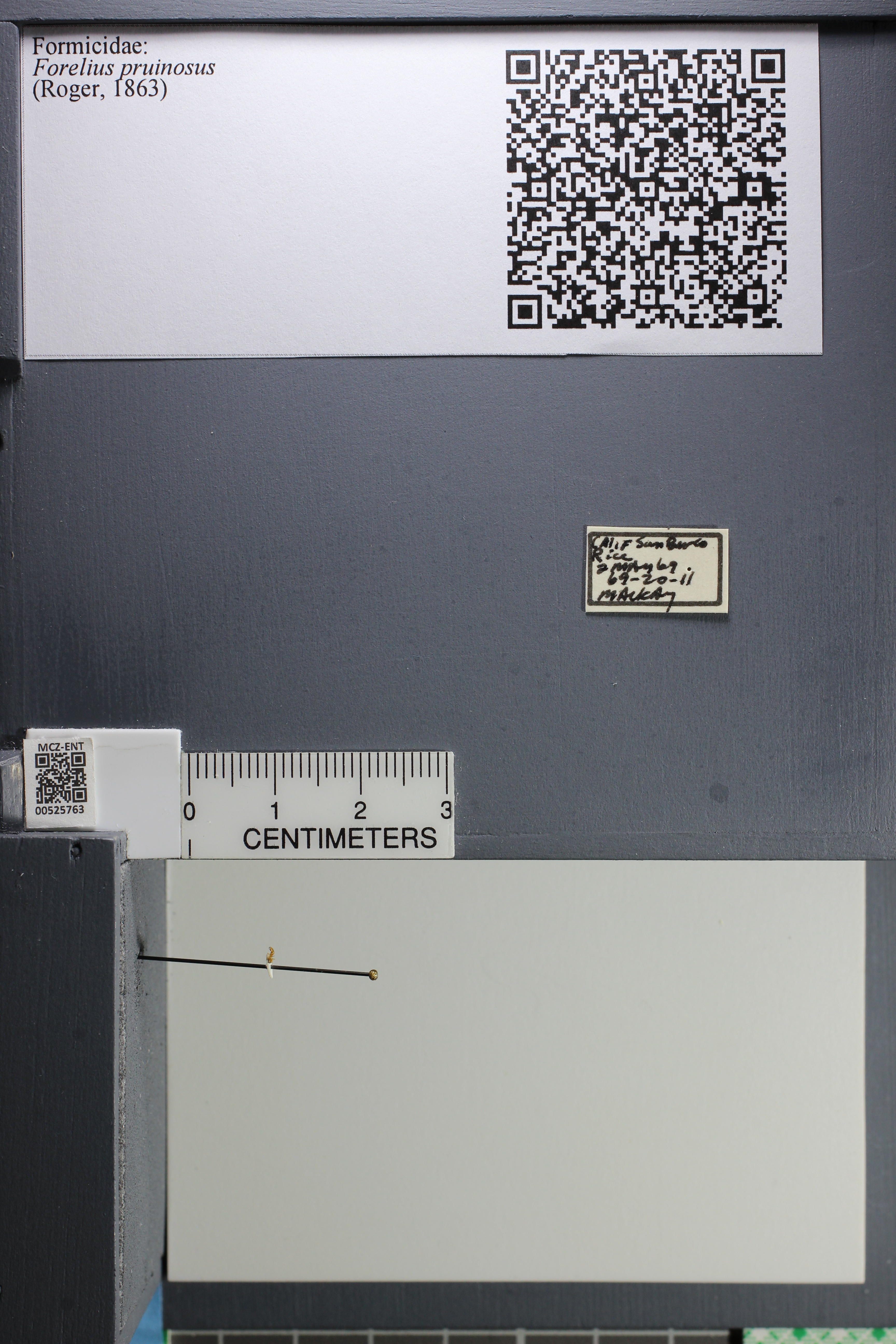 http://mczbase.mcz.harvard.edu/specimen_images/ent-formicidae/datashot/2014_07_23/IMG_302266.JPG