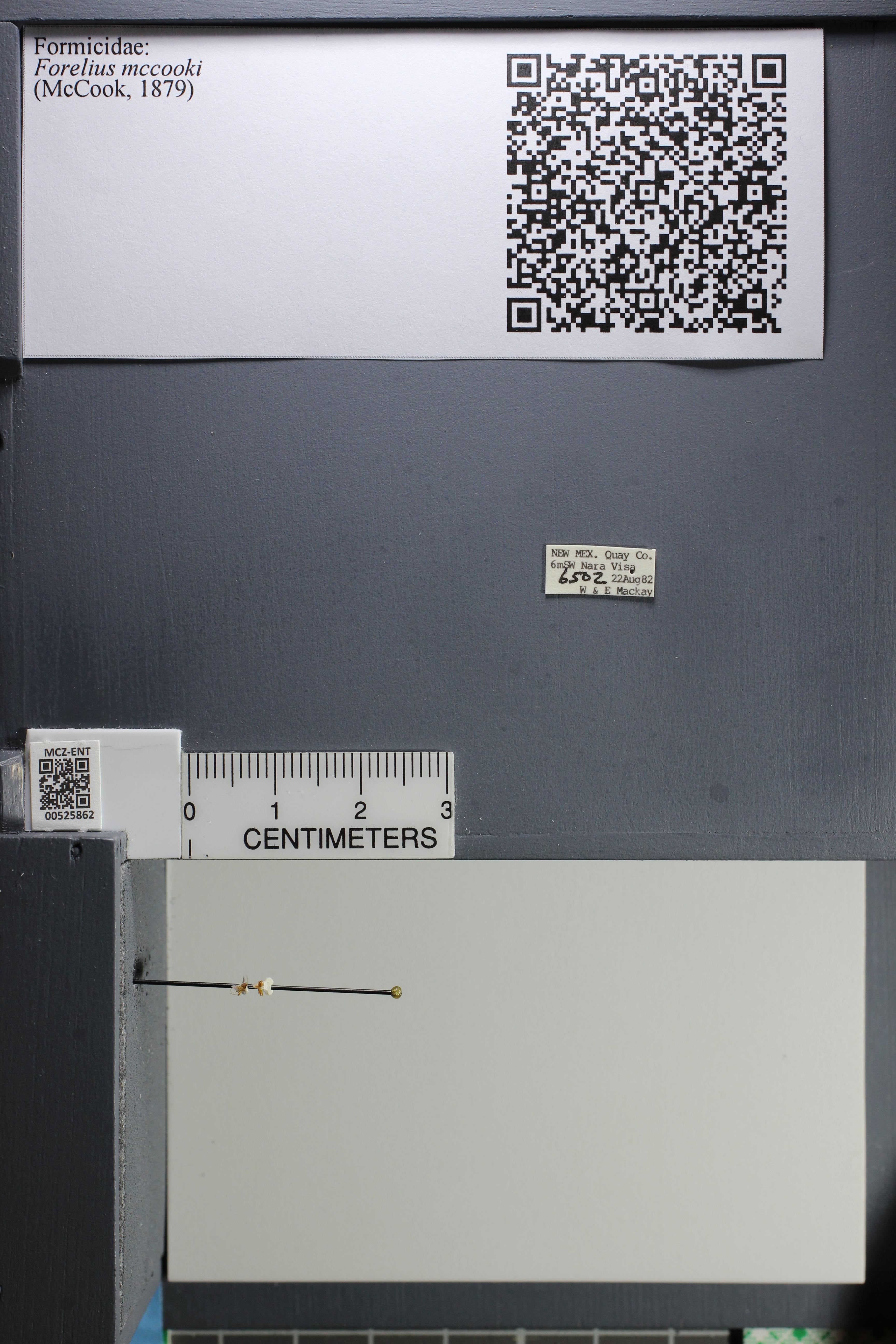 http://mczbase.mcz.harvard.edu/specimen_images/ent-formicidae/datashot/2014_07_23/IMG_302366.JPG