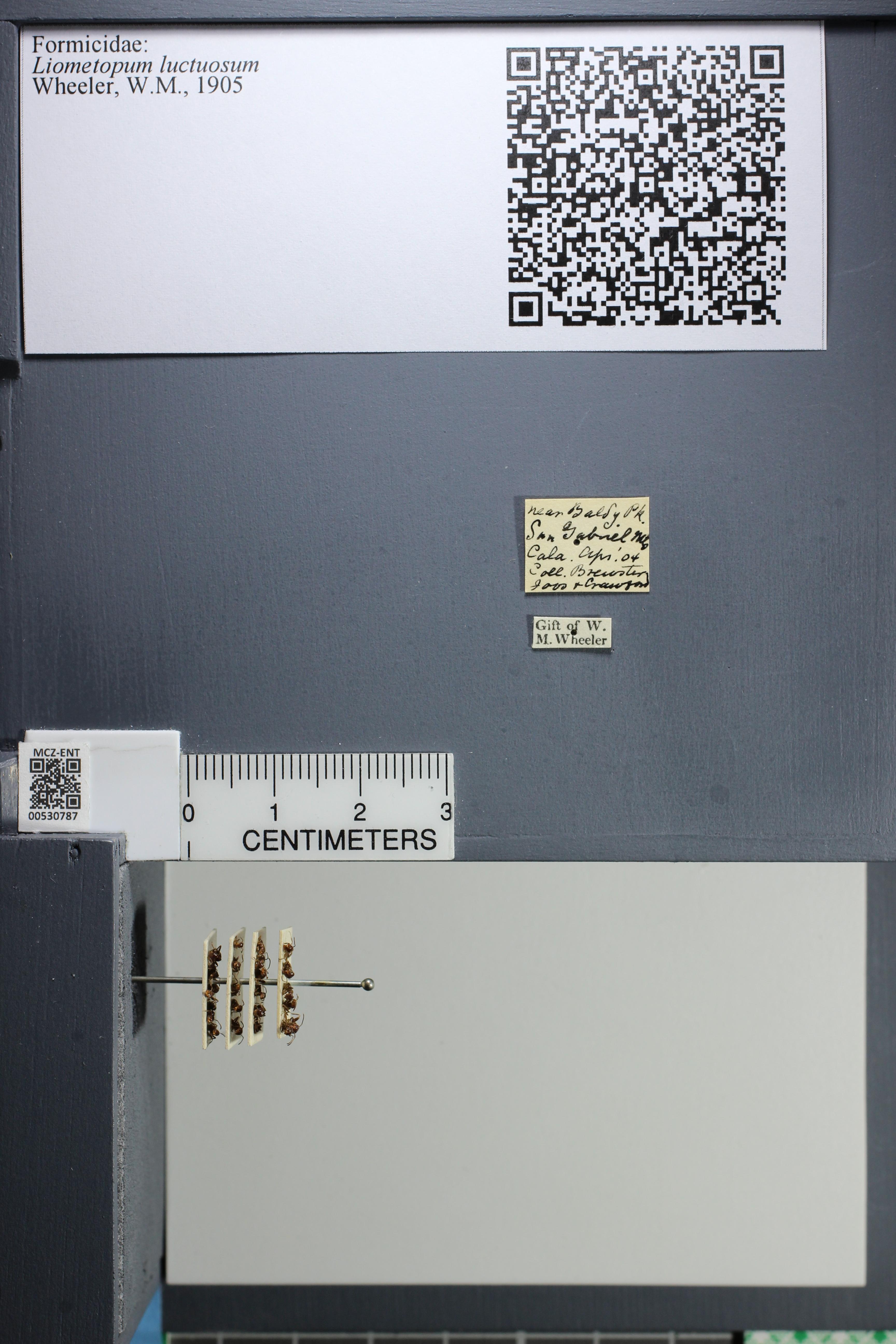 http://mczbase.mcz.harvard.edu/specimen_images/ent-formicidae/datashot/2014_07_30/IMG_302631.JPG