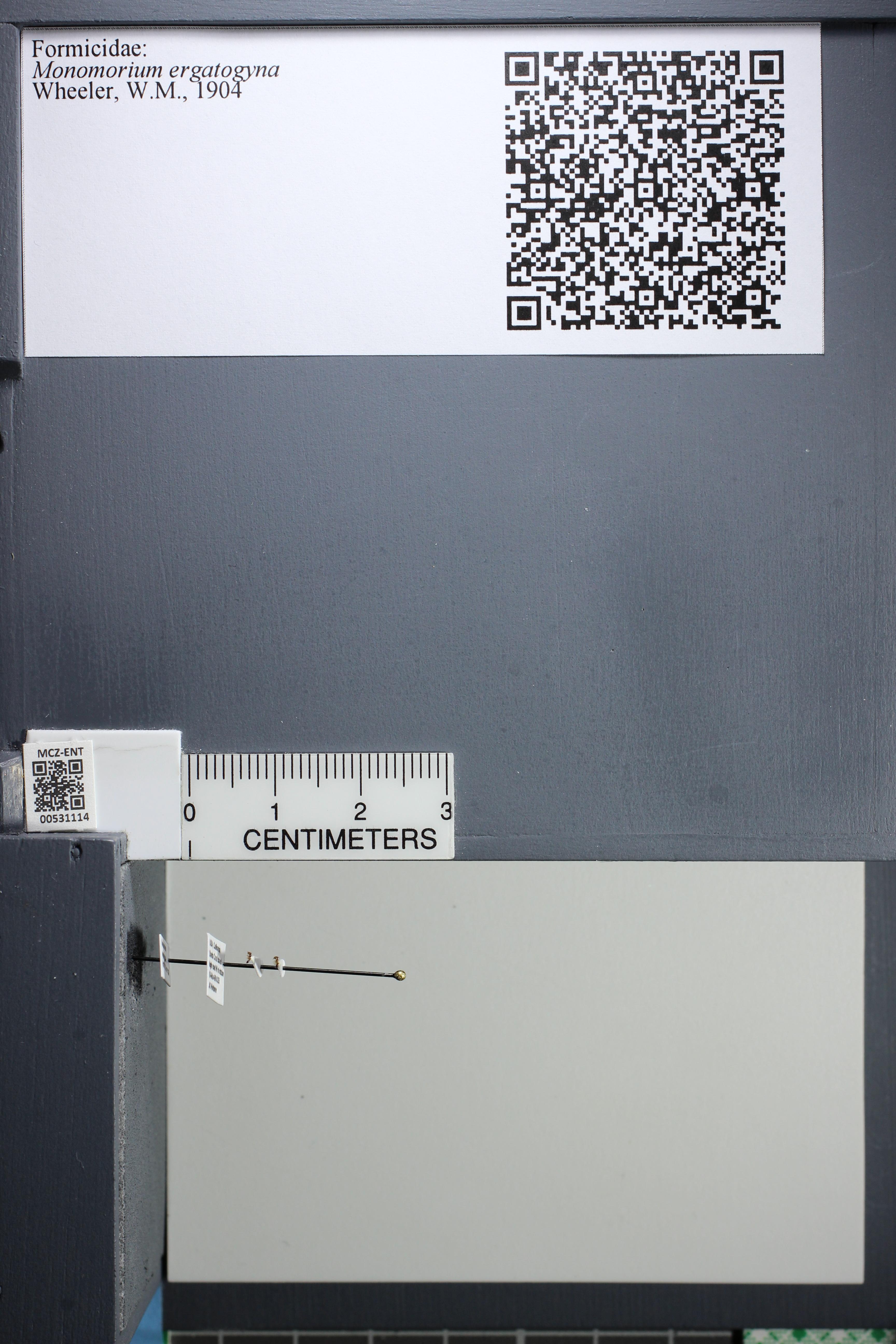 http://mczbase.mcz.harvard.edu/specimen_images/ent-formicidae/datashot/2014_08_01/IMG_302816.JPG