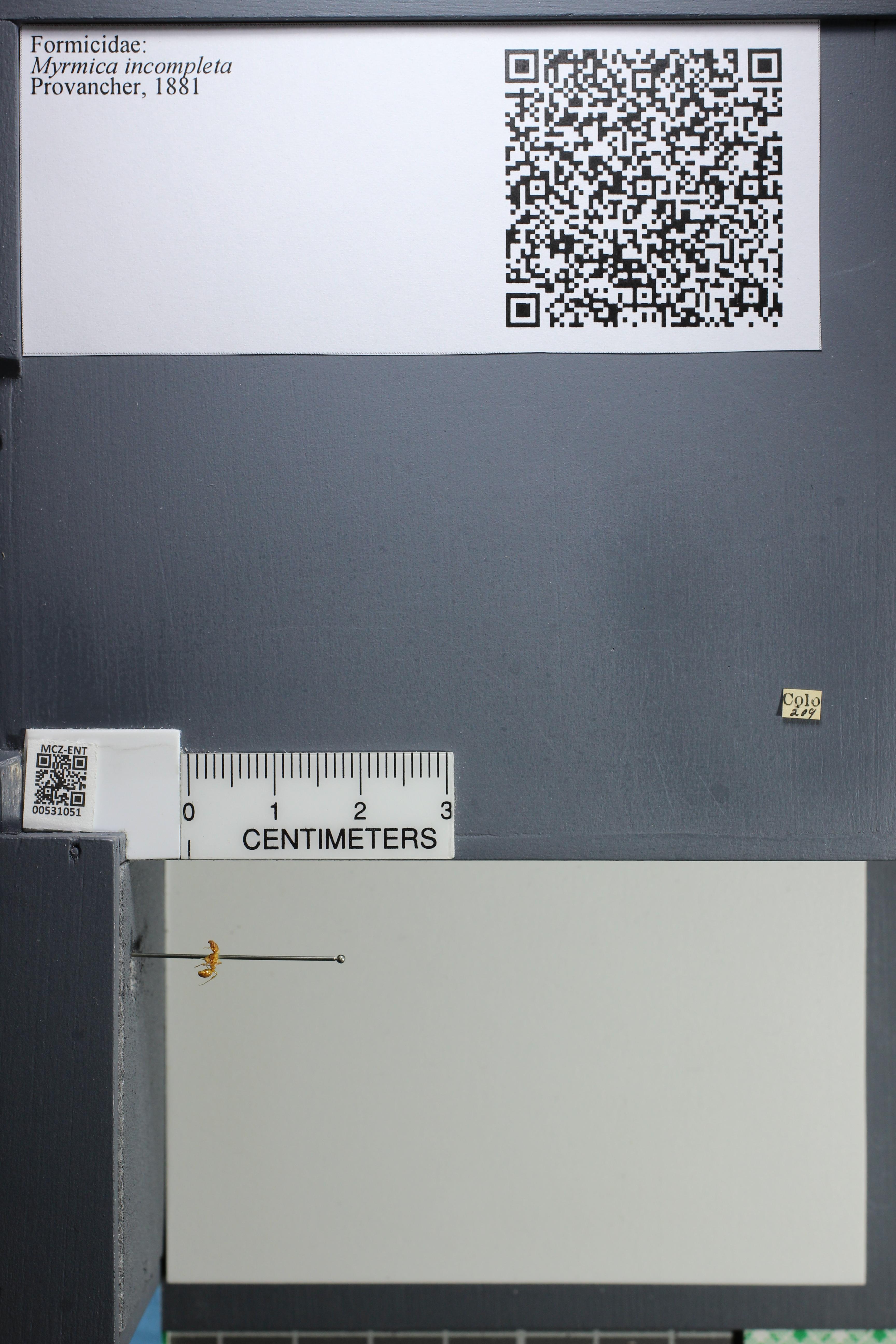 http://mczbase.mcz.harvard.edu/specimen_images/ent-formicidae/datashot/2014_08_06/IMG_302960.JPG