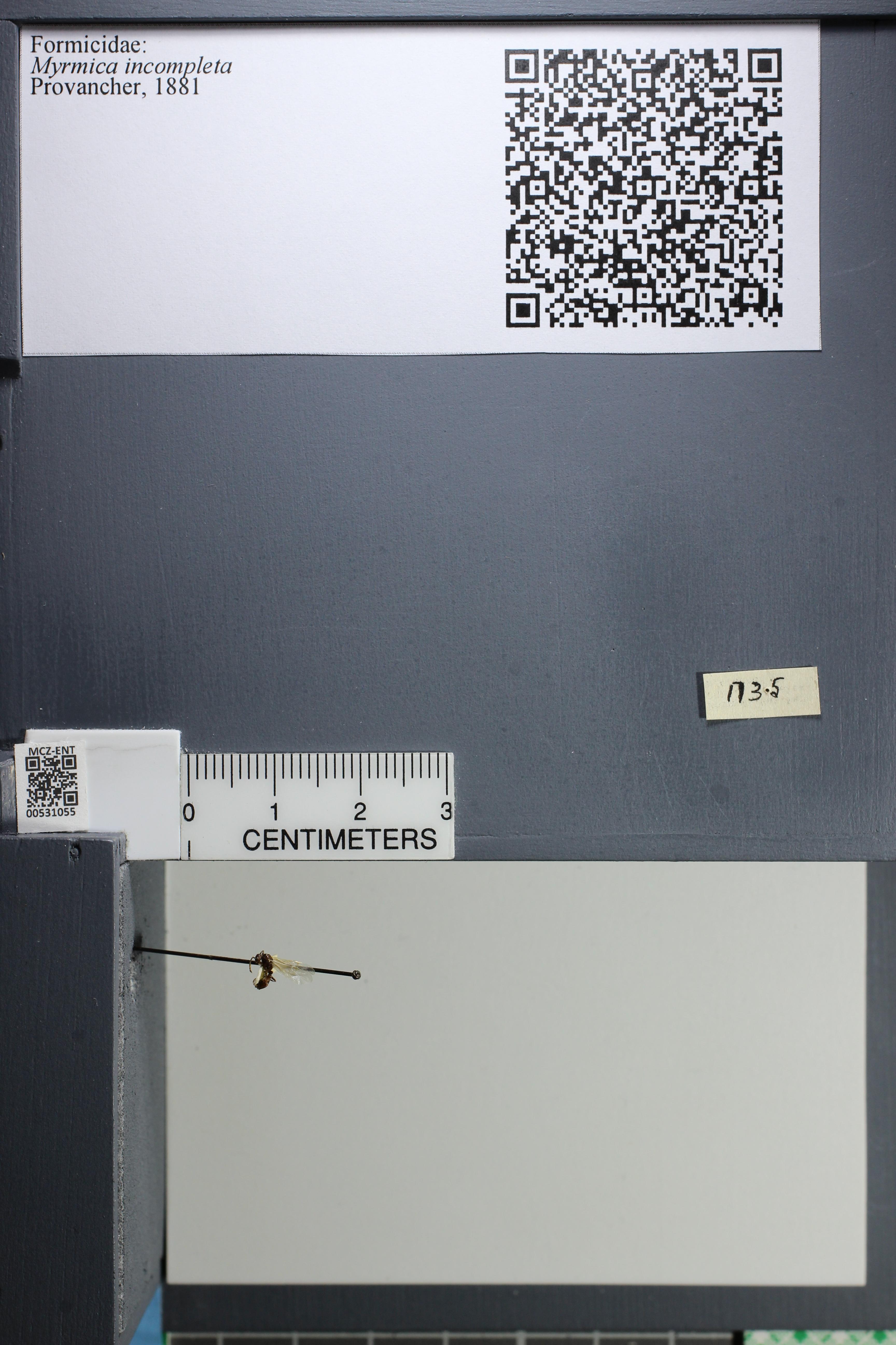 http://mczbase.mcz.harvard.edu/specimen_images/ent-formicidae/datashot/2014_08_06/IMG_302965.JPG