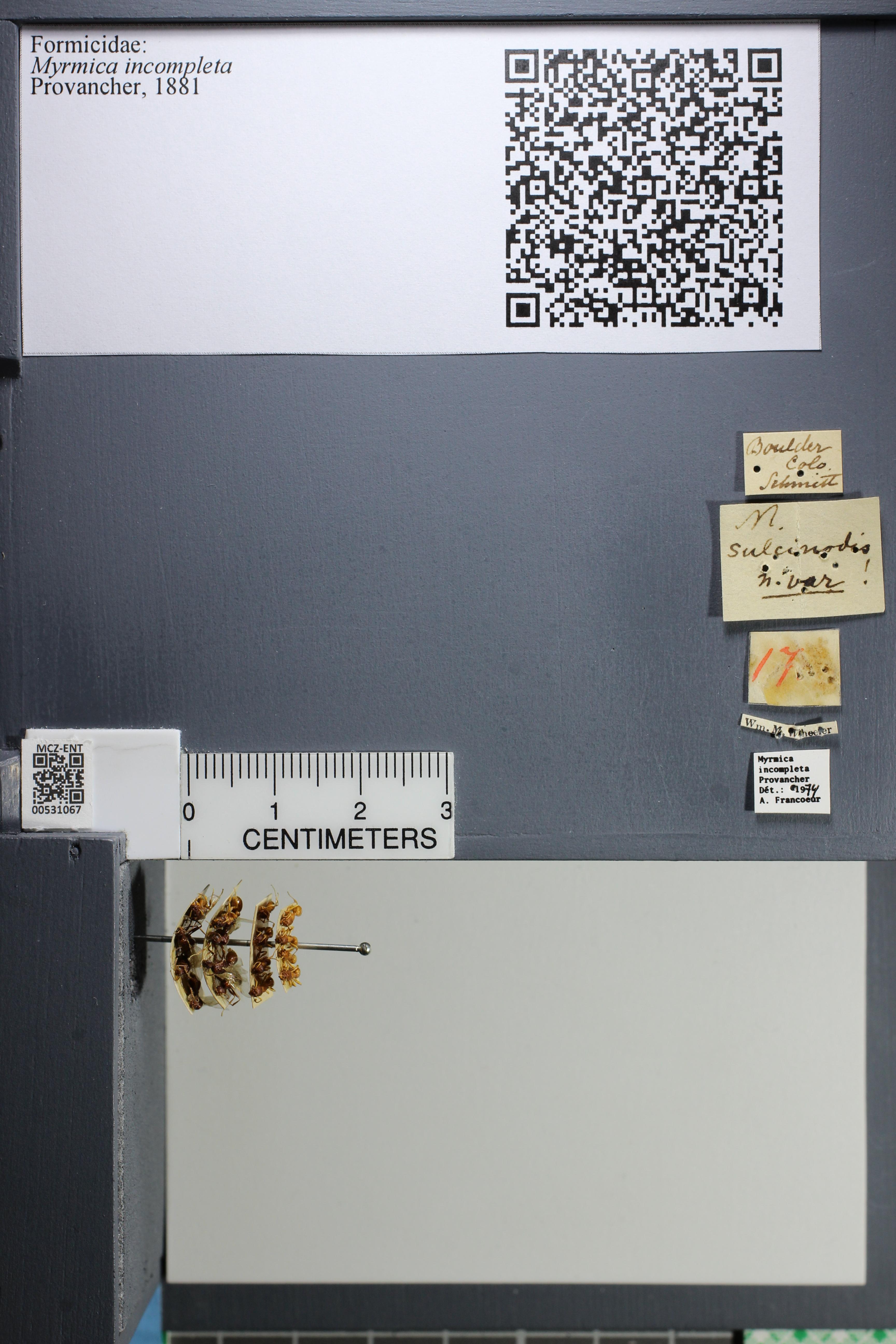 http://mczbase.mcz.harvard.edu/specimen_images/ent-formicidae/datashot/2014_08_06/IMG_302979.JPG