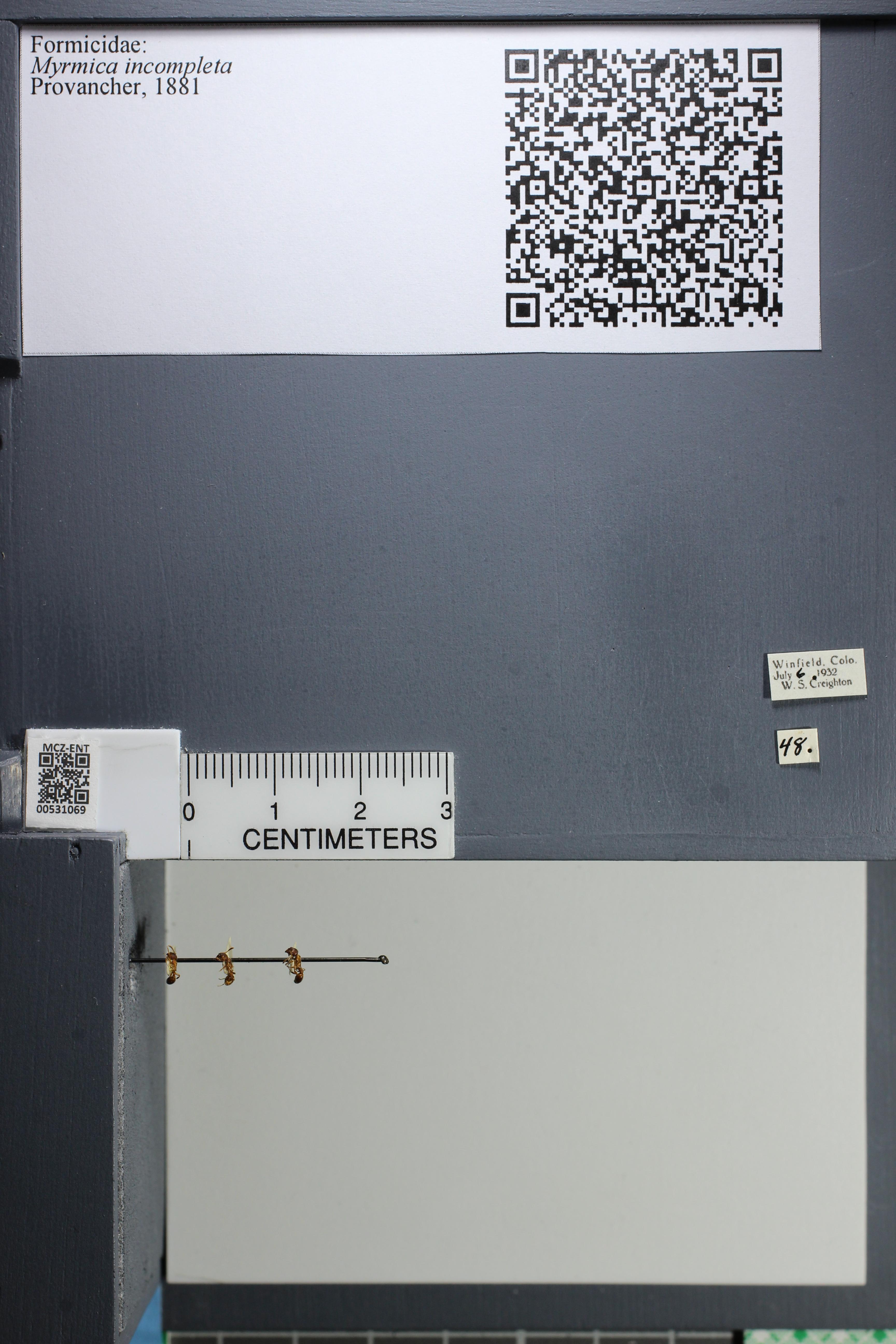 http://mczbase.mcz.harvard.edu/specimen_images/ent-formicidae/datashot/2014_08_06/IMG_302981.JPG