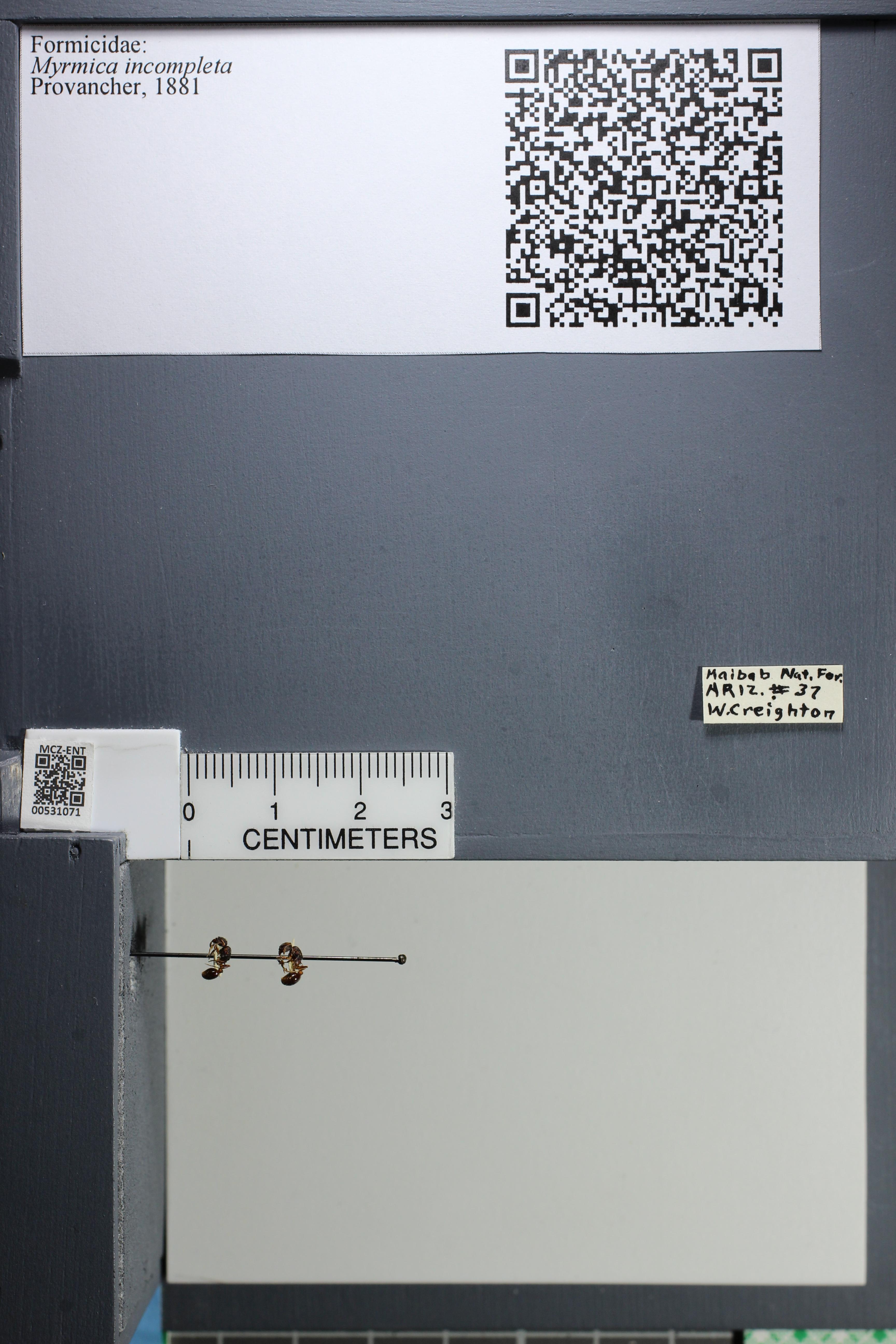 http://mczbase.mcz.harvard.edu/specimen_images/ent-formicidae/datashot/2014_08_06/IMG_302983.JPG