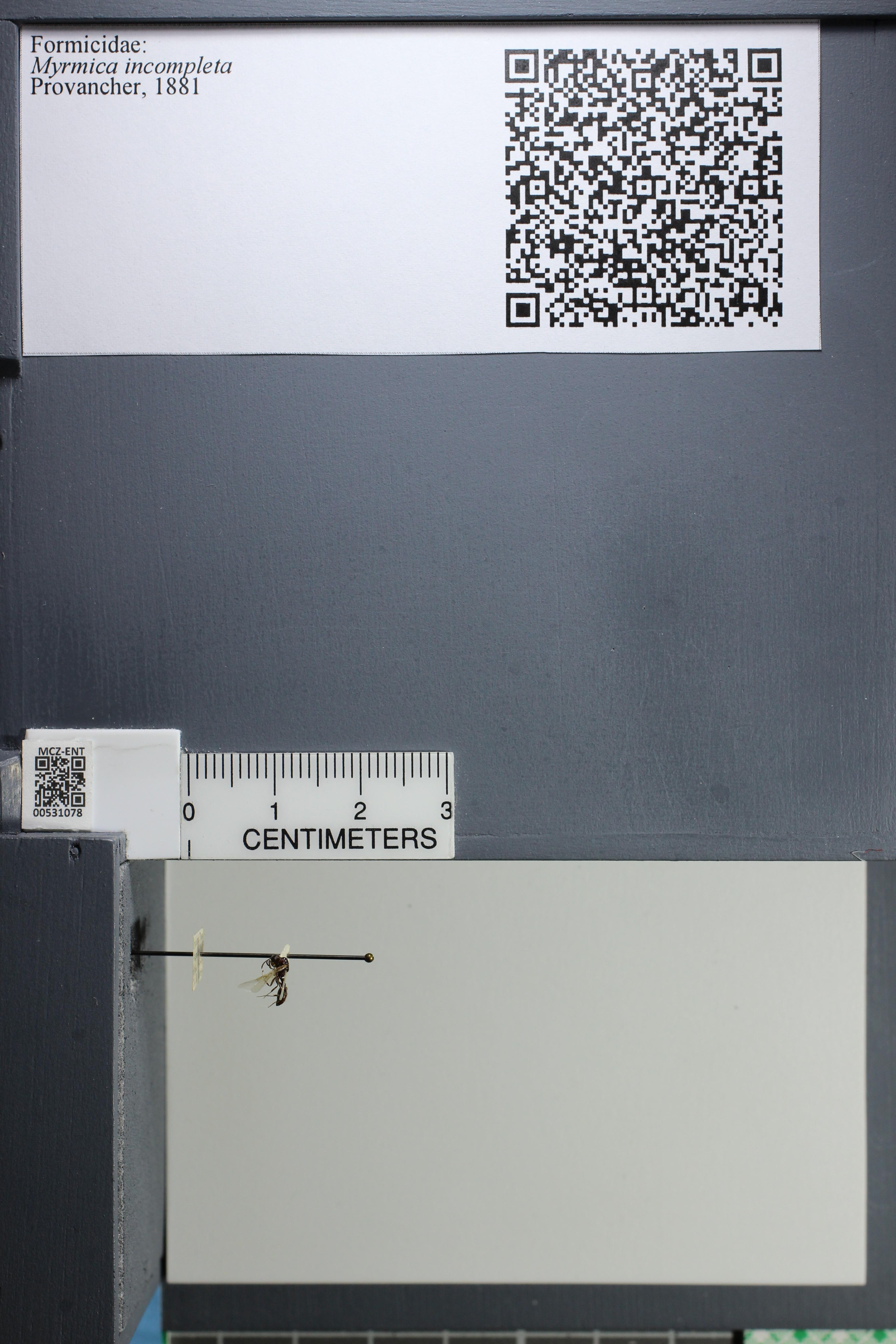 http://mczbase.mcz.harvard.edu/specimen_images/ent-formicidae/datashot/2014_08_06/IMG_302992.JPG