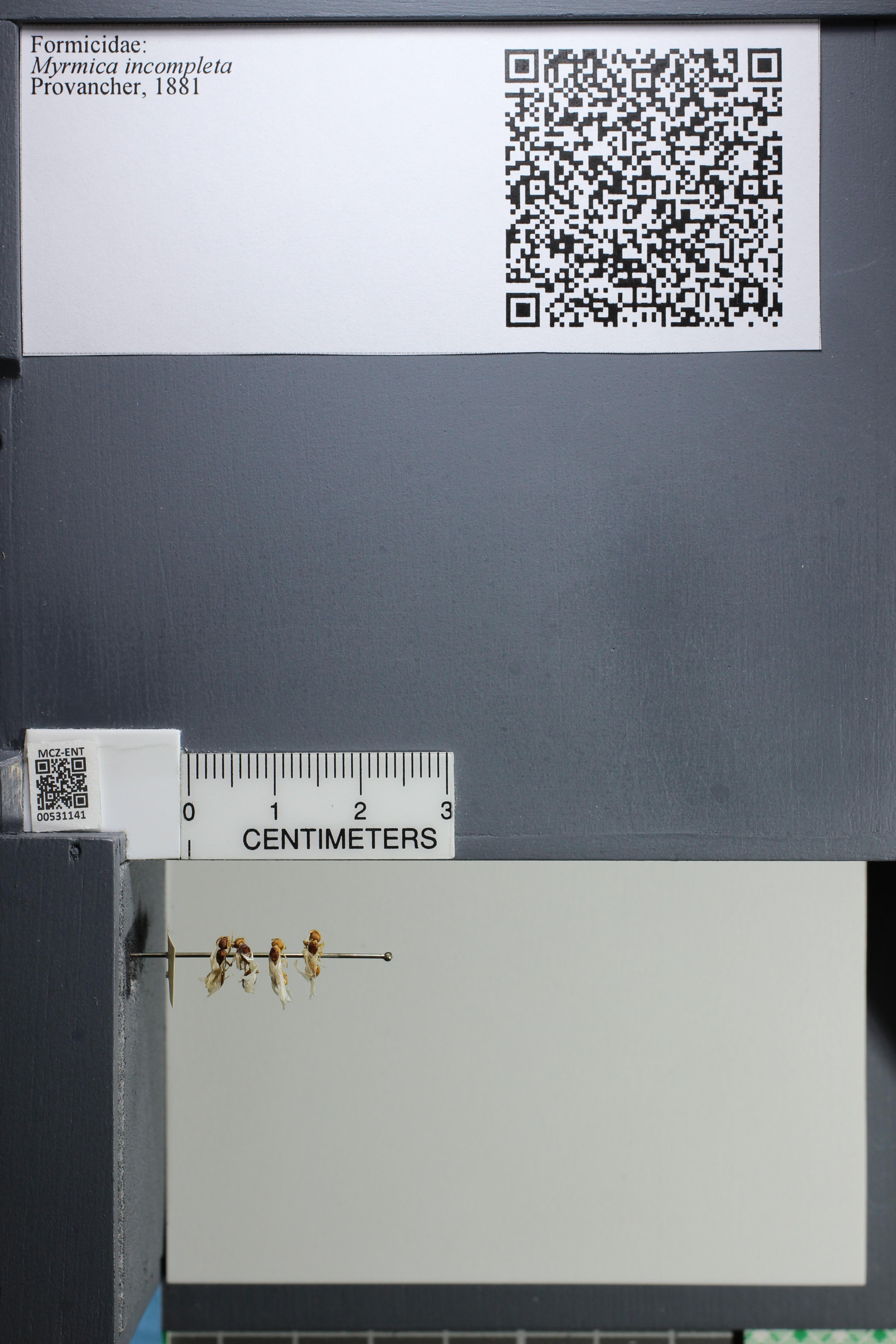 http://mczbase.mcz.harvard.edu/specimen_images/ent-formicidae/datashot/2014_08_06/IMG_303011.JPG