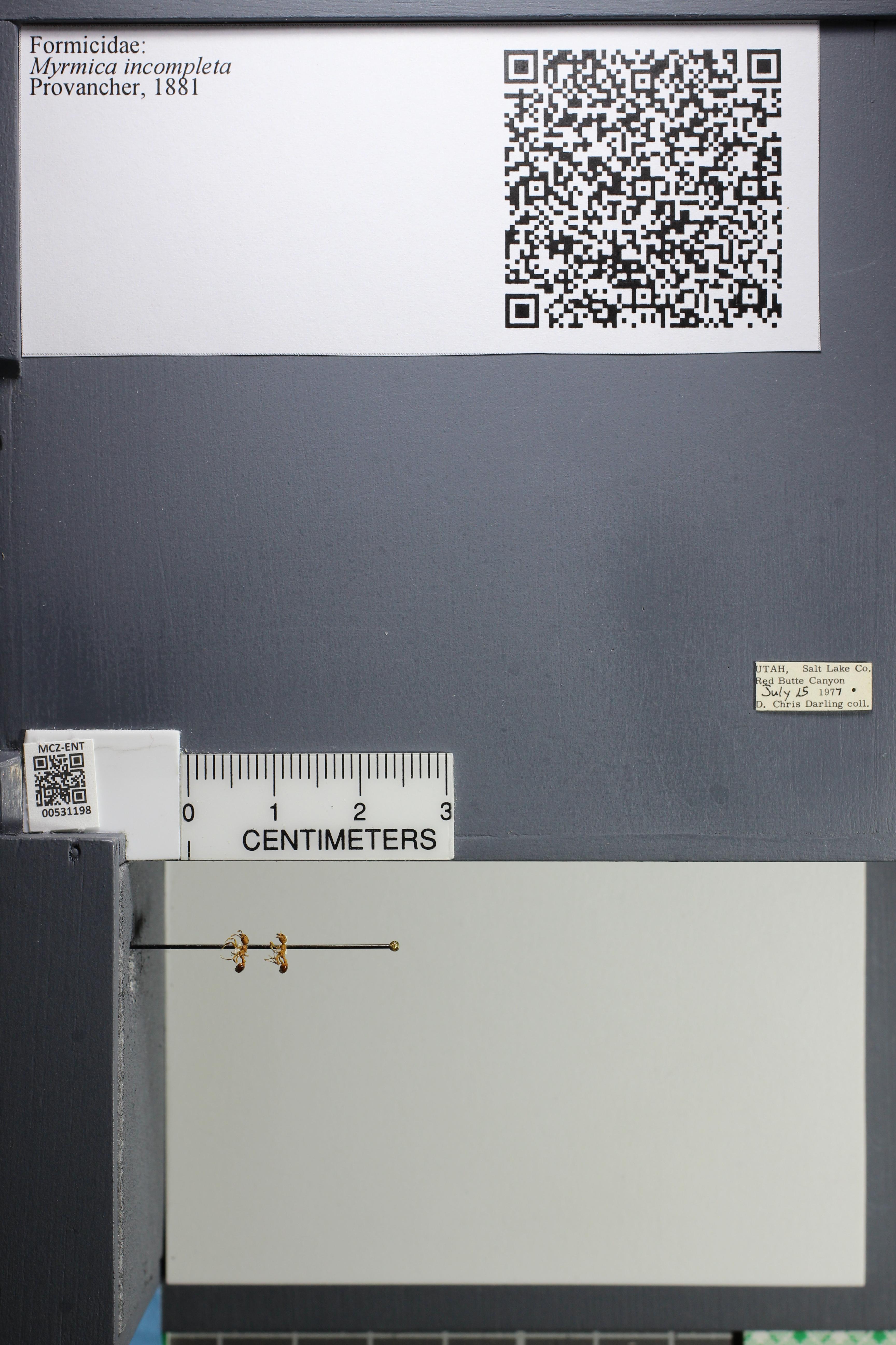http://mczbase.mcz.harvard.edu/specimen_images/ent-formicidae/datashot/2014_08_07/IMG_303014.JPG