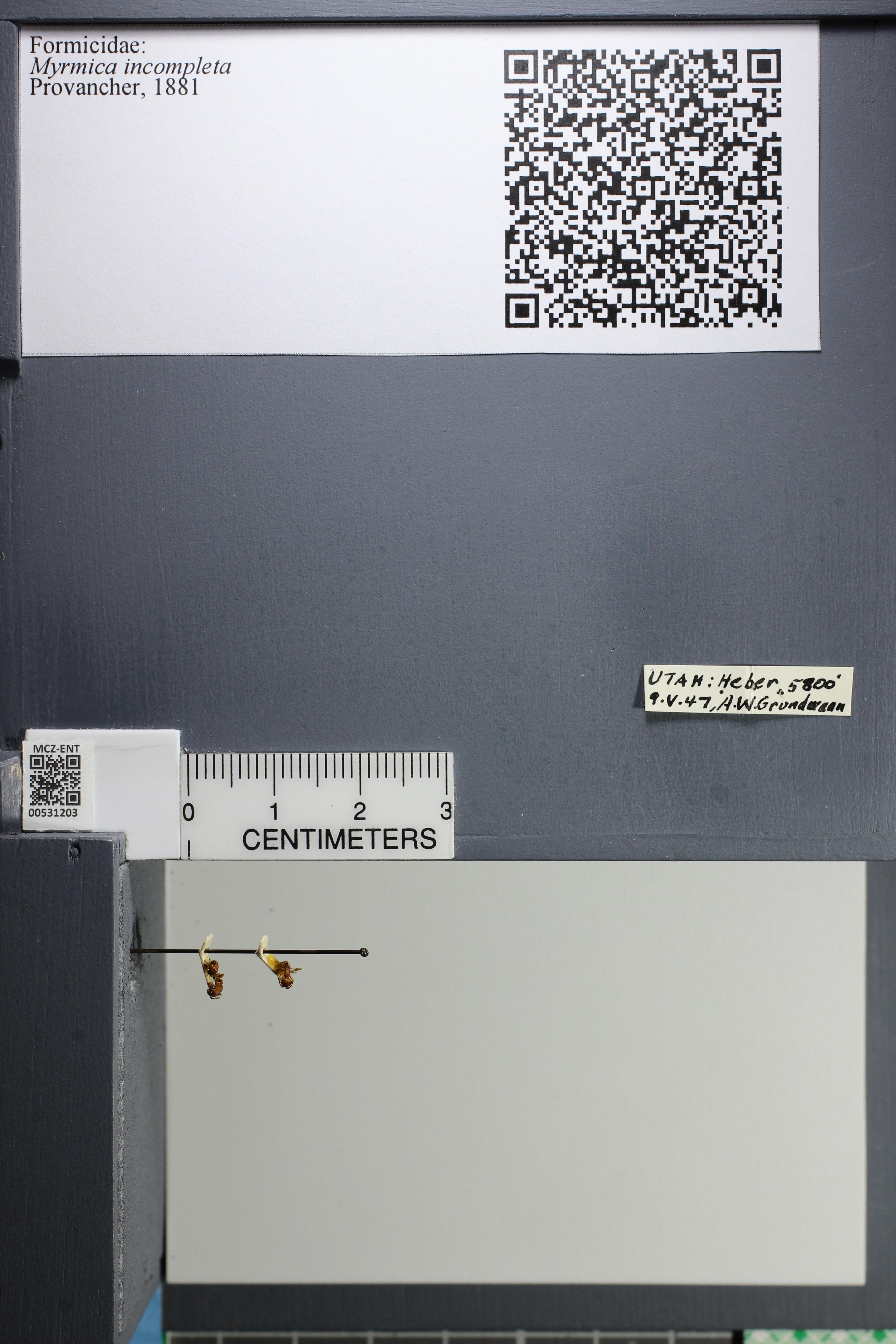 http://mczbase.mcz.harvard.edu/specimen_images/ent-formicidae/datashot/2014_08_07/IMG_303020.JPG
