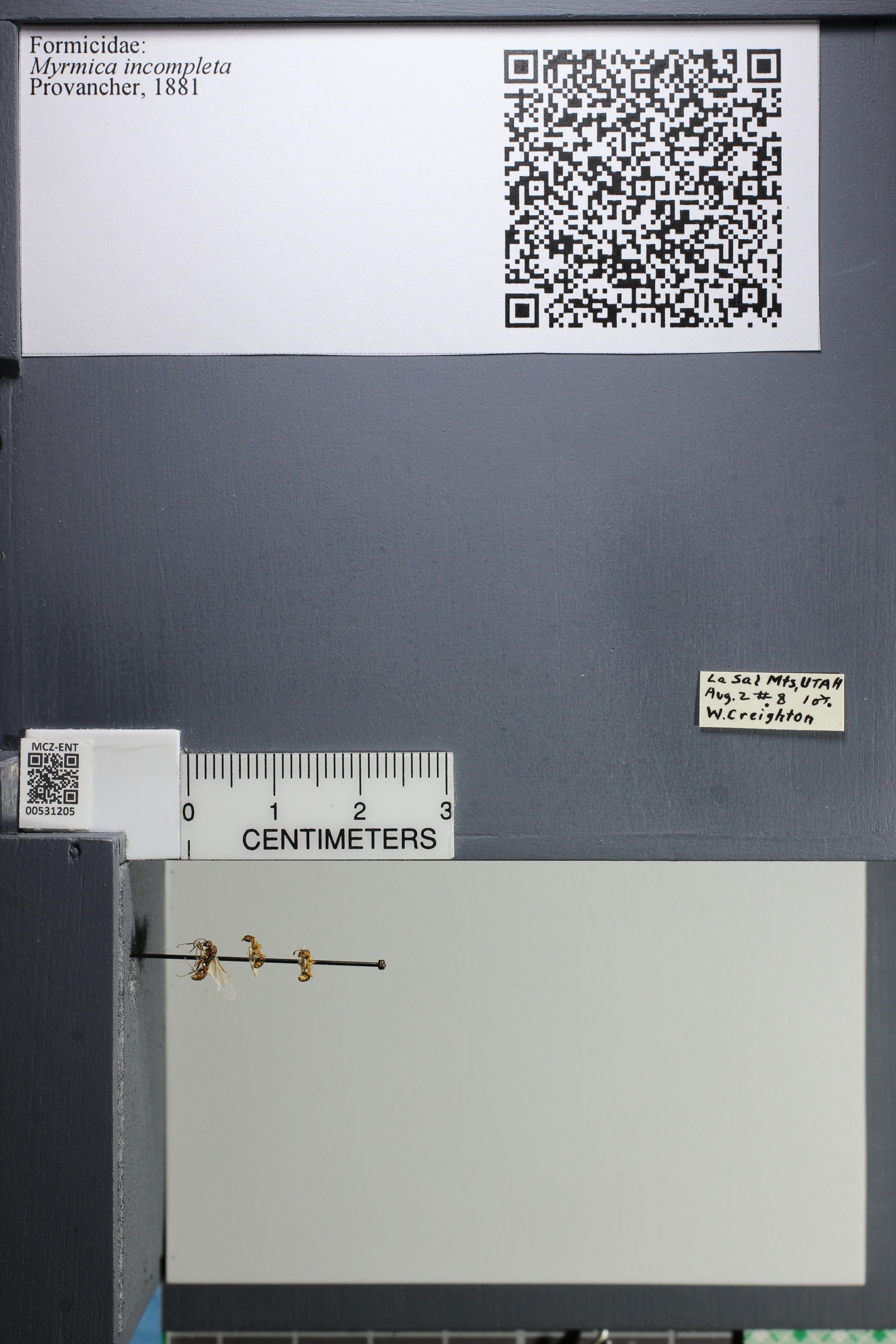 http://mczbase.mcz.harvard.edu/specimen_images/ent-formicidae/datashot/2014_08_07/IMG_303023.JPG