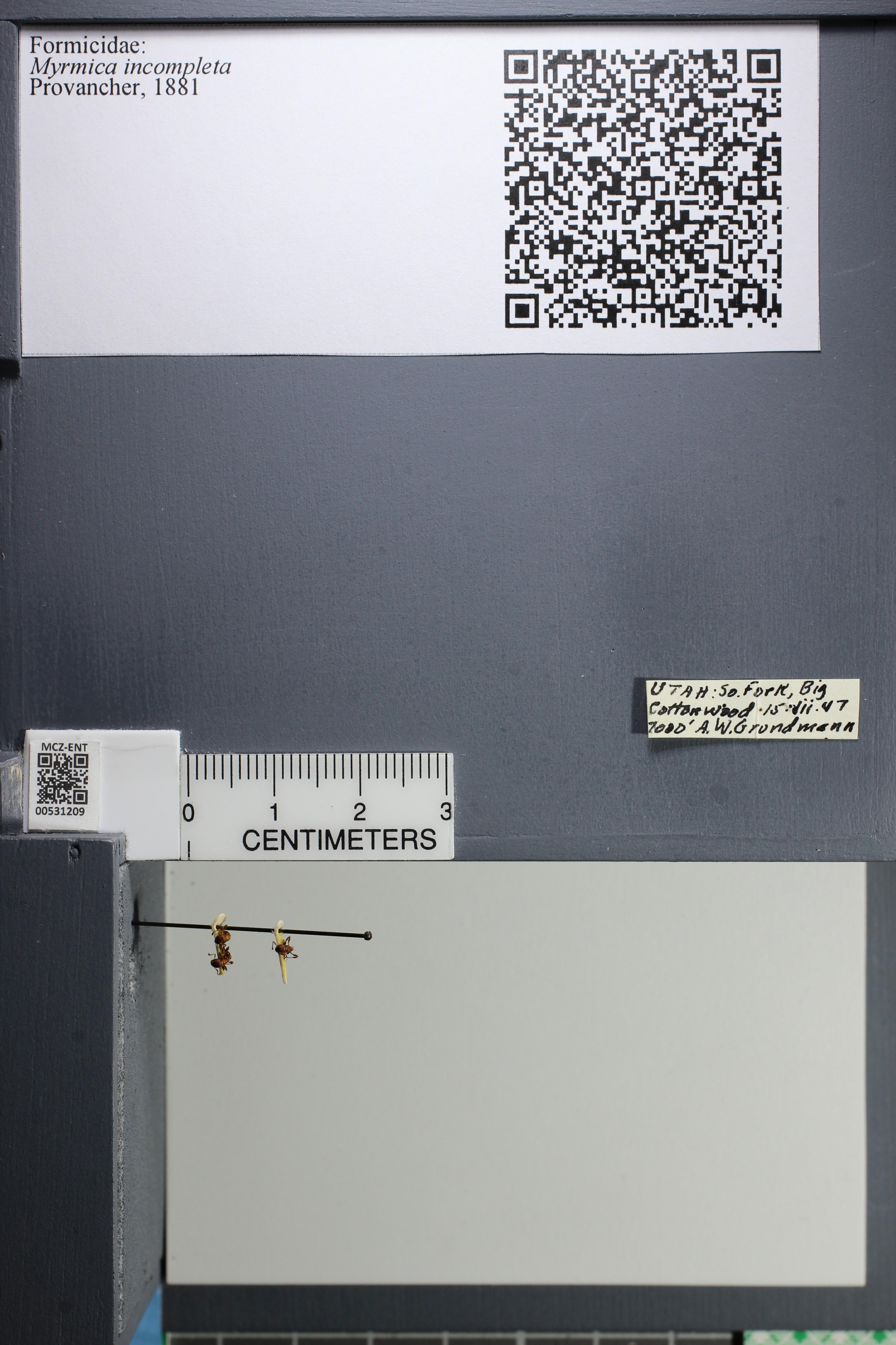 http://mczbase.mcz.harvard.edu/specimen_images/ent-formicidae/datashot/2014_08_08/IMG_303027.JPG