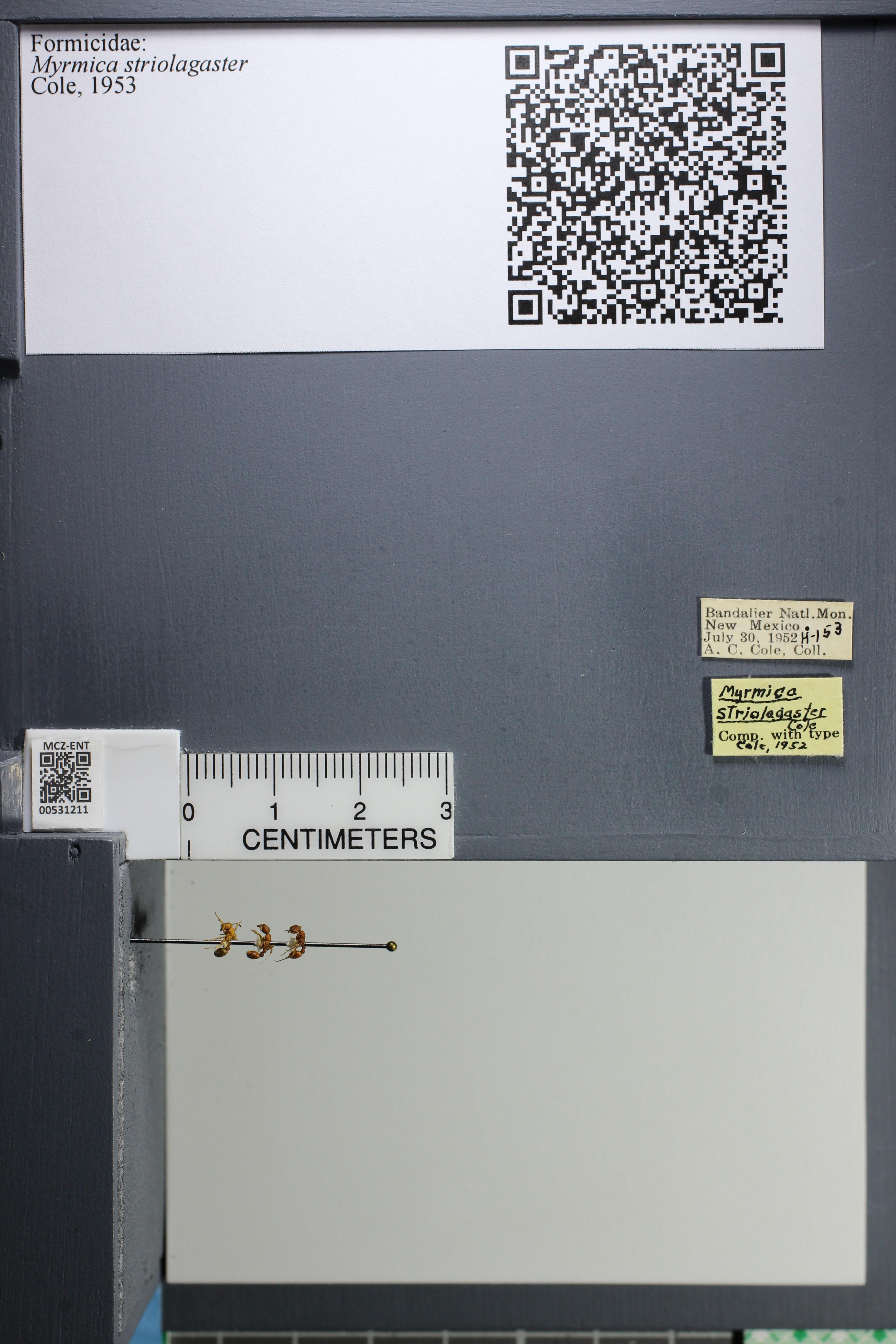 http://mczbase.mcz.harvard.edu/specimen_images/ent-formicidae/datashot/2014_08_08/IMG_303029.JPG