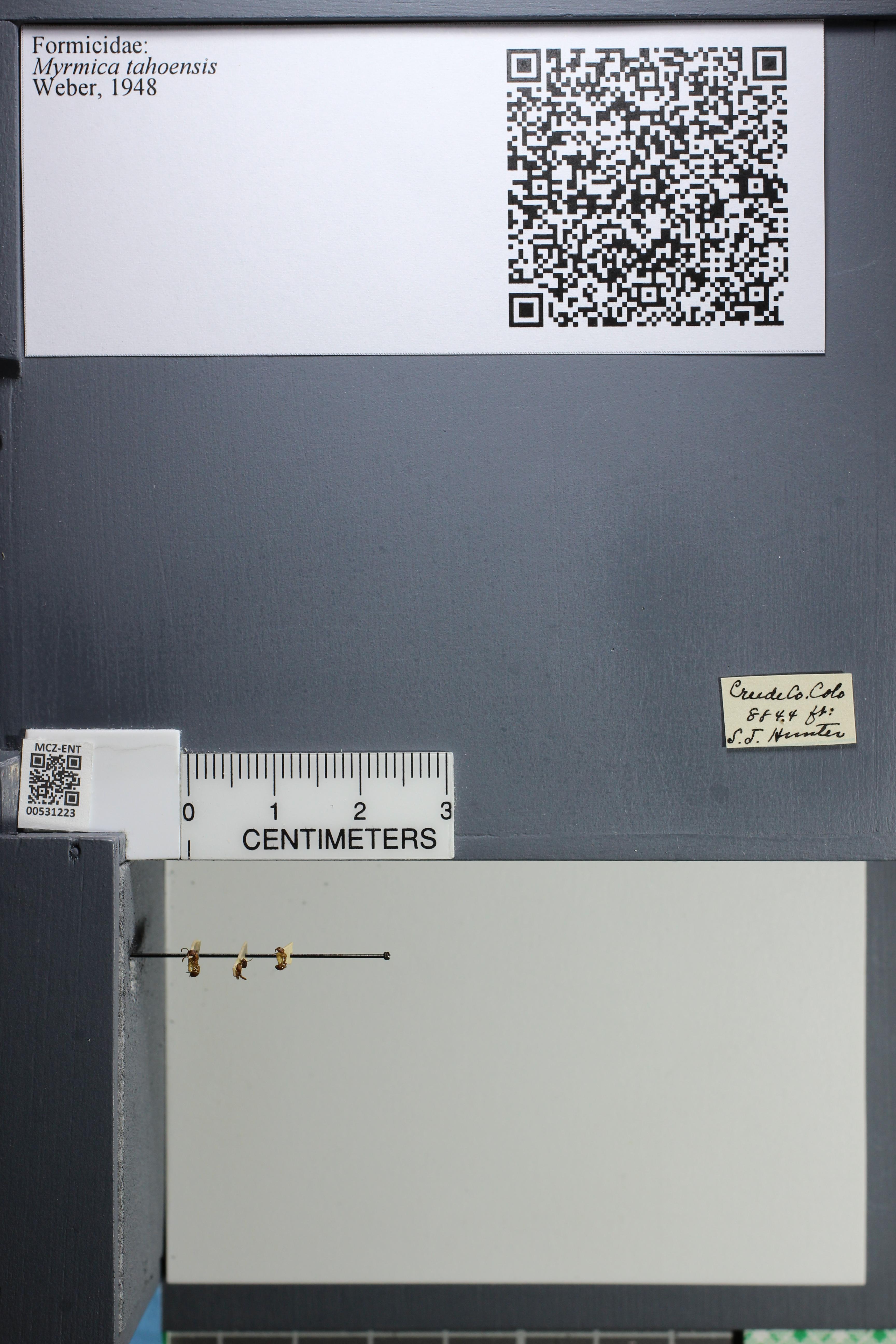 http://mczbase.mcz.harvard.edu/specimen_images/ent-formicidae/datashot/2014_08_08/IMG_303042.JPG