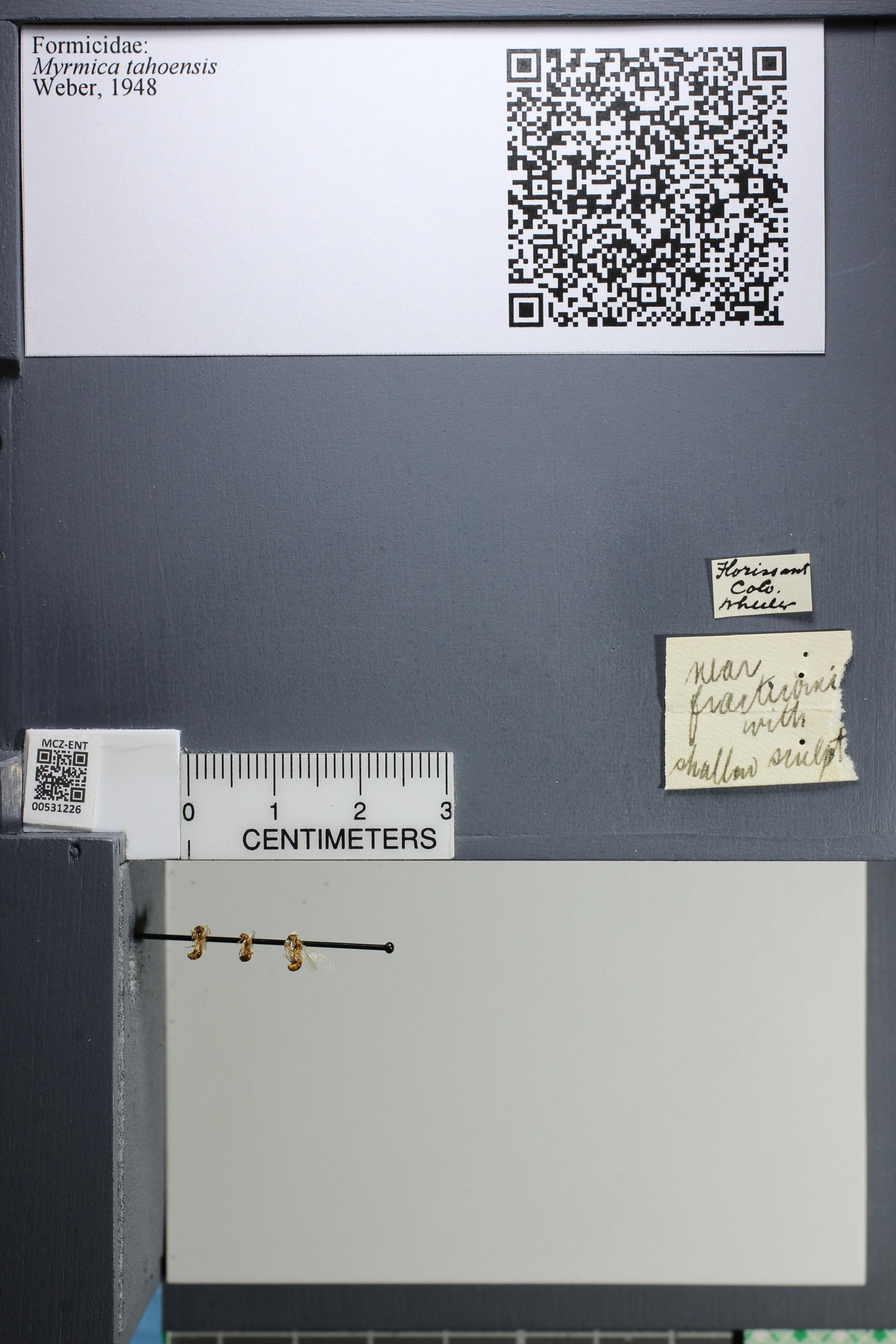 http://mczbase.mcz.harvard.edu/specimen_images/ent-formicidae/datashot/2014_08_08/IMG_303045.JPG