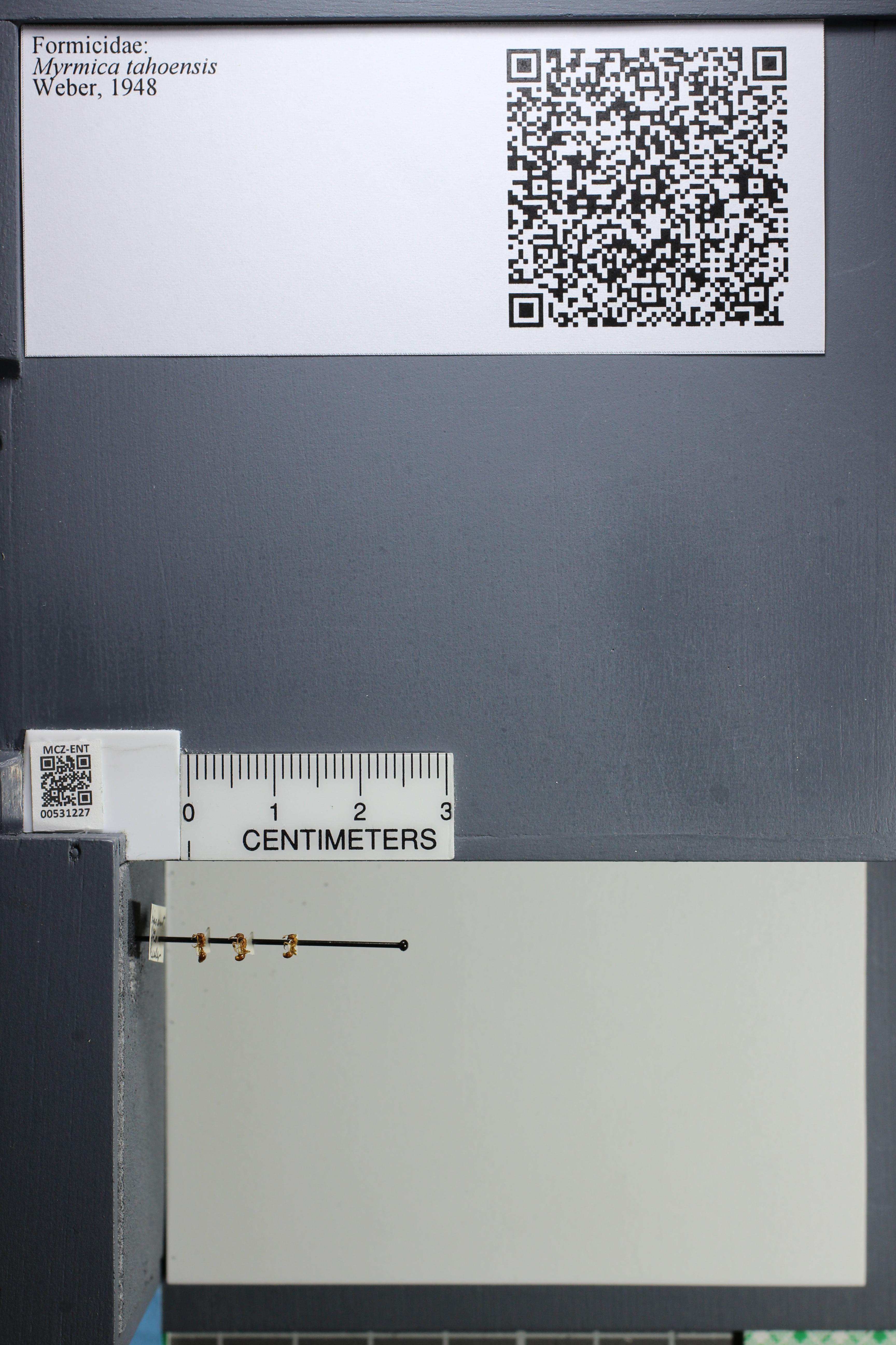 http://mczbase.mcz.harvard.edu/specimen_images/ent-formicidae/datashot/2014_08_08/IMG_303046.JPG